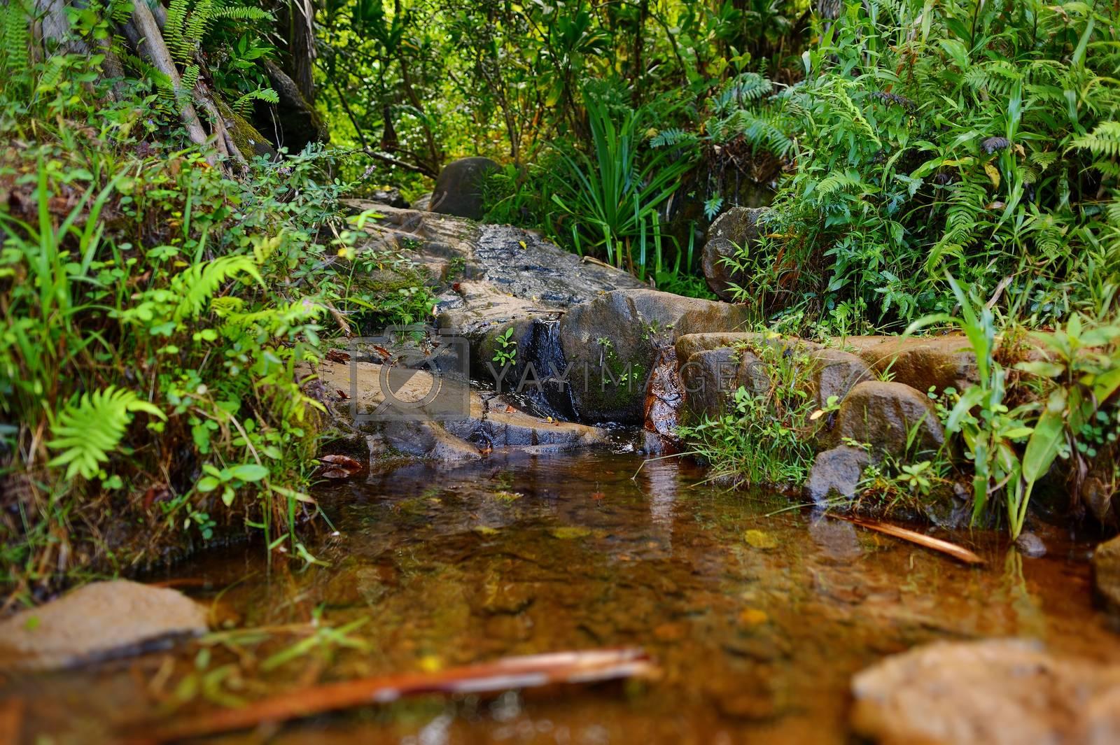 Small tropical river or stream on Kalalau trail, Kauai, Hawaii
