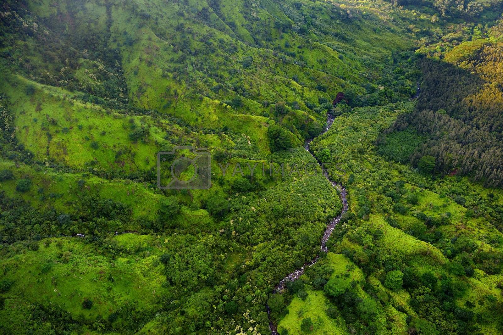 Stunning aerial view of spectacular jungles, Kauai, Hawaii