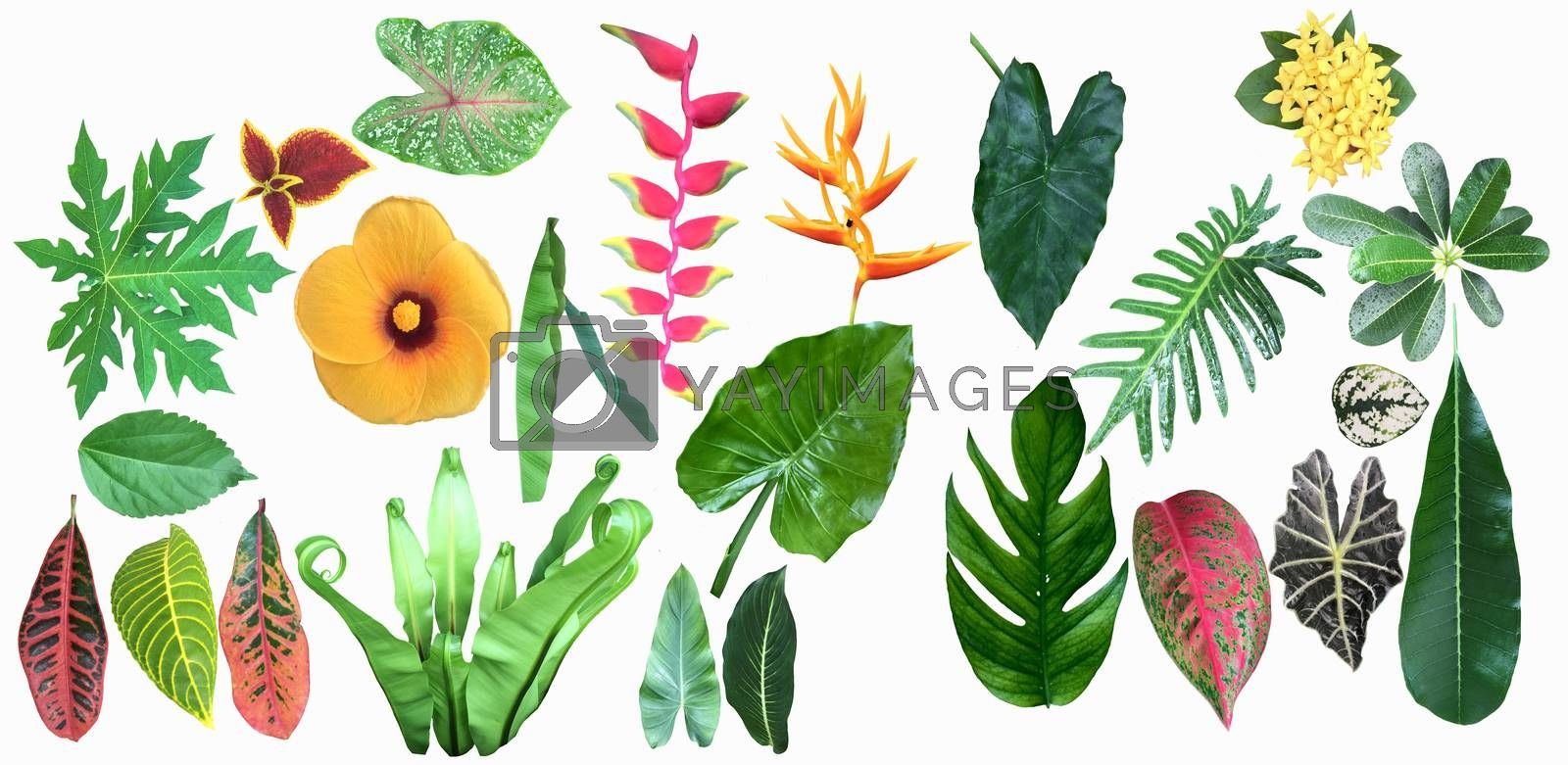 Tropical jungle leaves and flowers collection on white background.