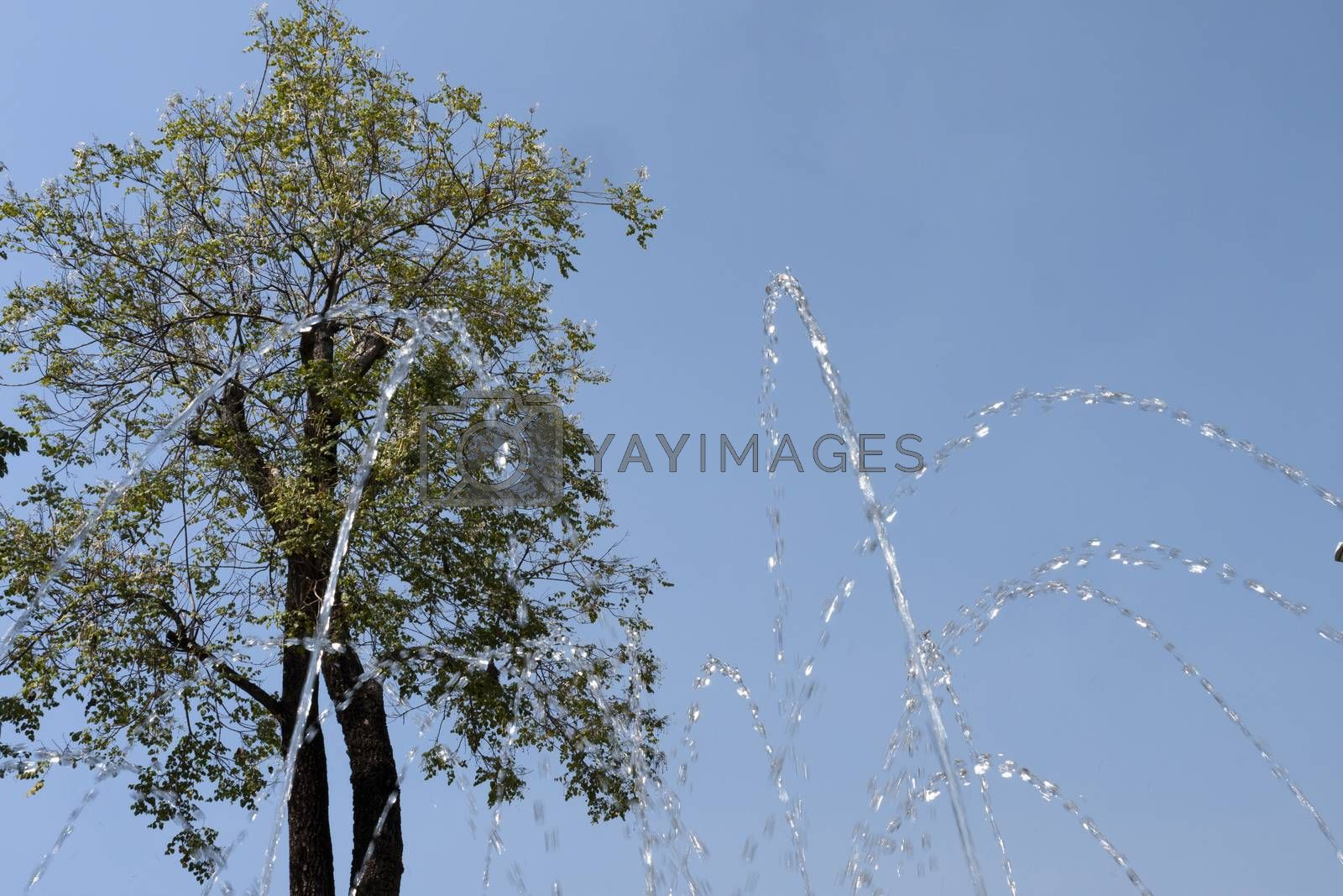 Water jet shooting from a fountain with tall tree and blue sky in the background.
