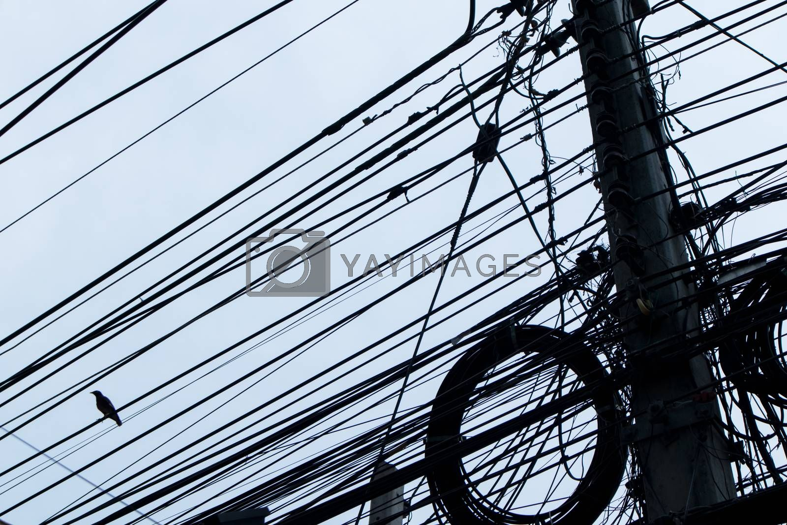 Silhouette of Bird on electrical wires in the city