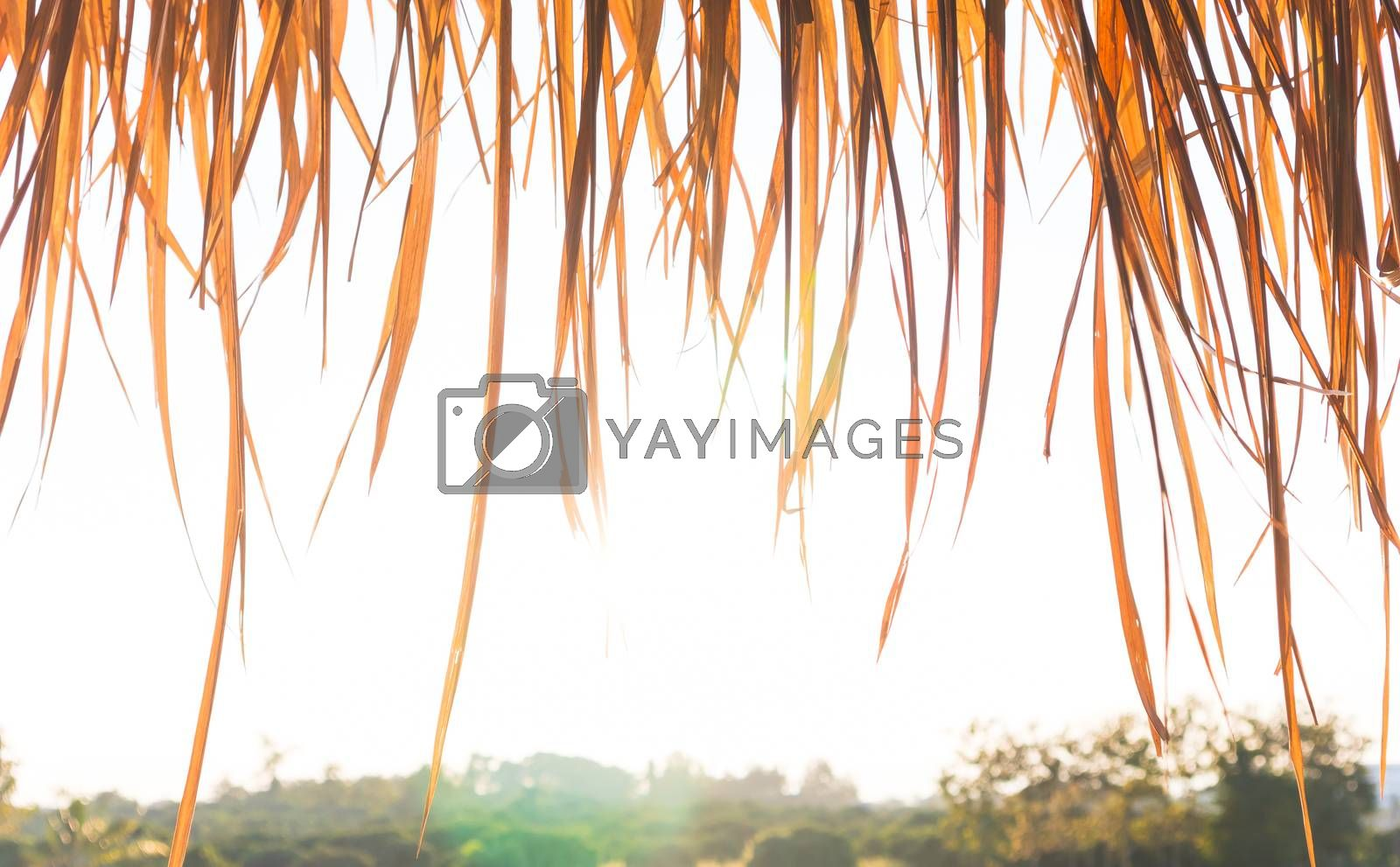 Dry grass roof on country farm background. Tropical house summer vacation concept.