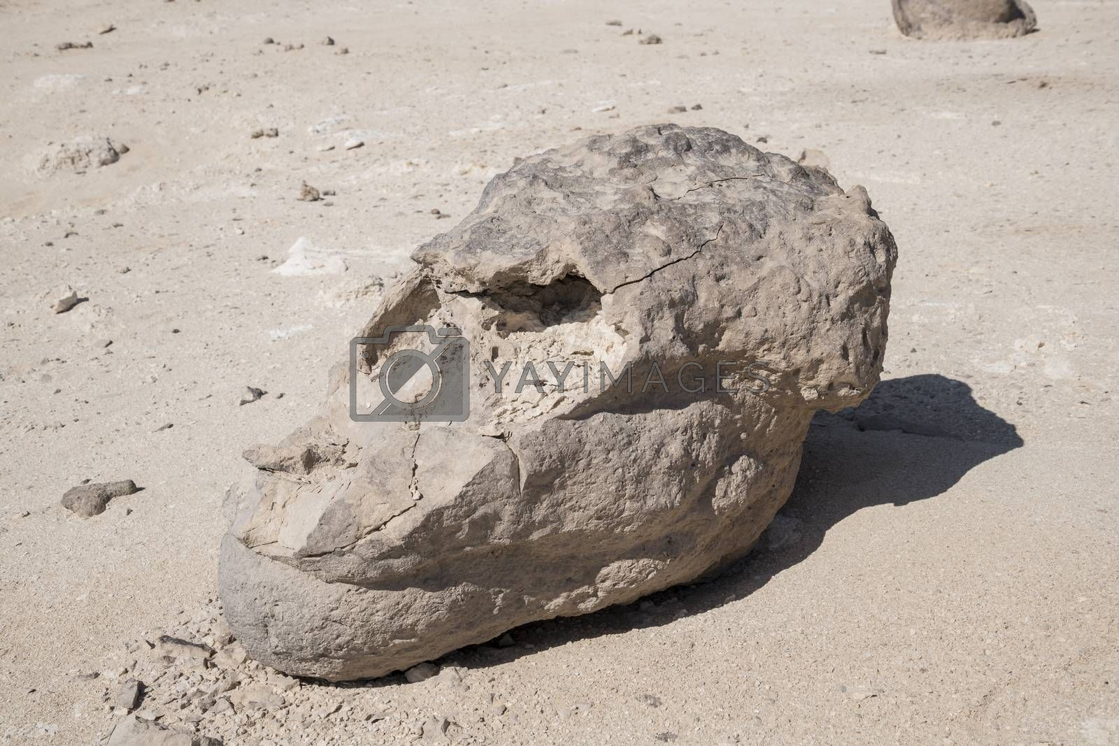Rock looking like a Monkey head at Rock Garden (Rock Zoo of Duqm or Duqm Stone Park) , a famous tourist attraction of a 3 sqkm of rock formations (shaped by wind, water and other natural forces), limestone and marine fossils which  was created in an underground water aquifer around more than Forty Six million years ago, Duqm, Sultanate of Oman