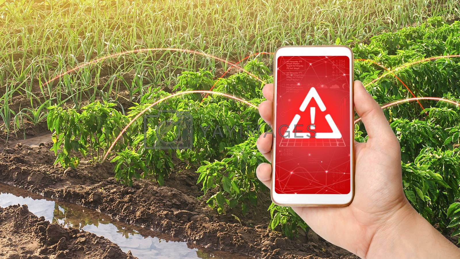 A phone and a warning sign on the background of bell pepper and leek onions plantations. Growing vegetables on the farm, harvesting for sale. Agribusiness and farming. Improving efficiency by iLixe48
