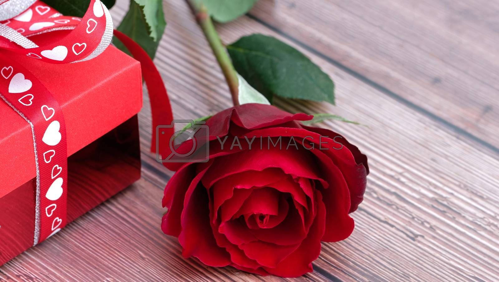 Blooming beautiful red rose and red present box  by Nawoot