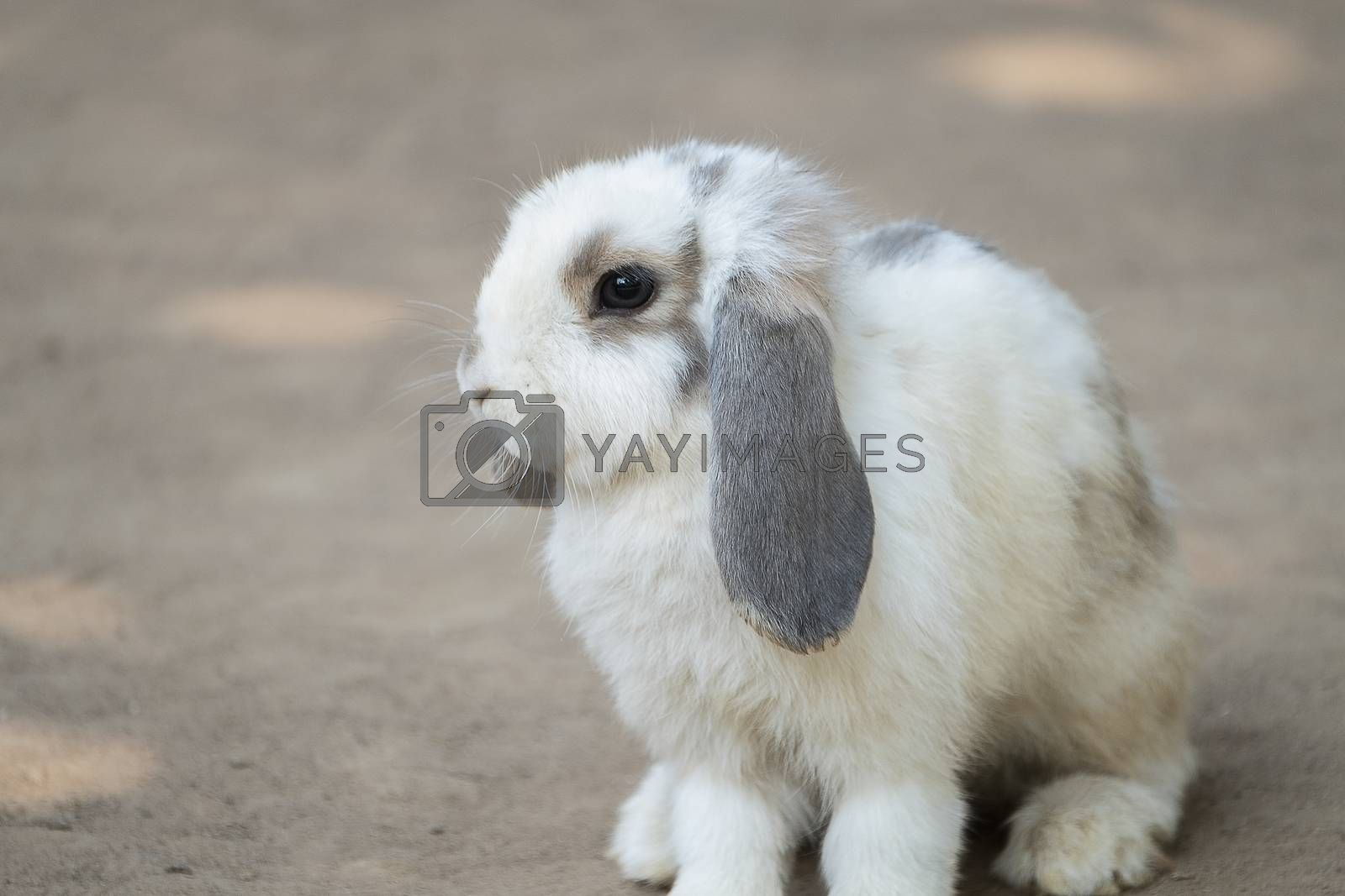 cute little rabbit by Nawoot