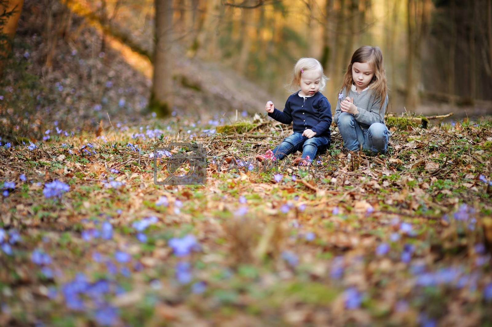Two little sisters picking the first flowers of spring on sunny evening