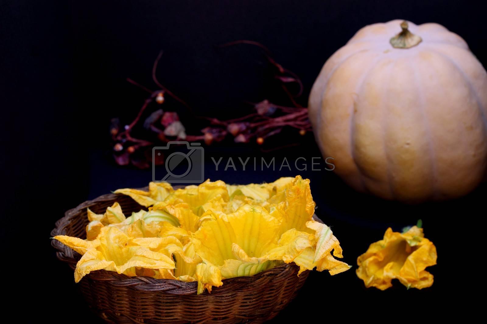 Pumpkin flowers and pumpkin on dark background