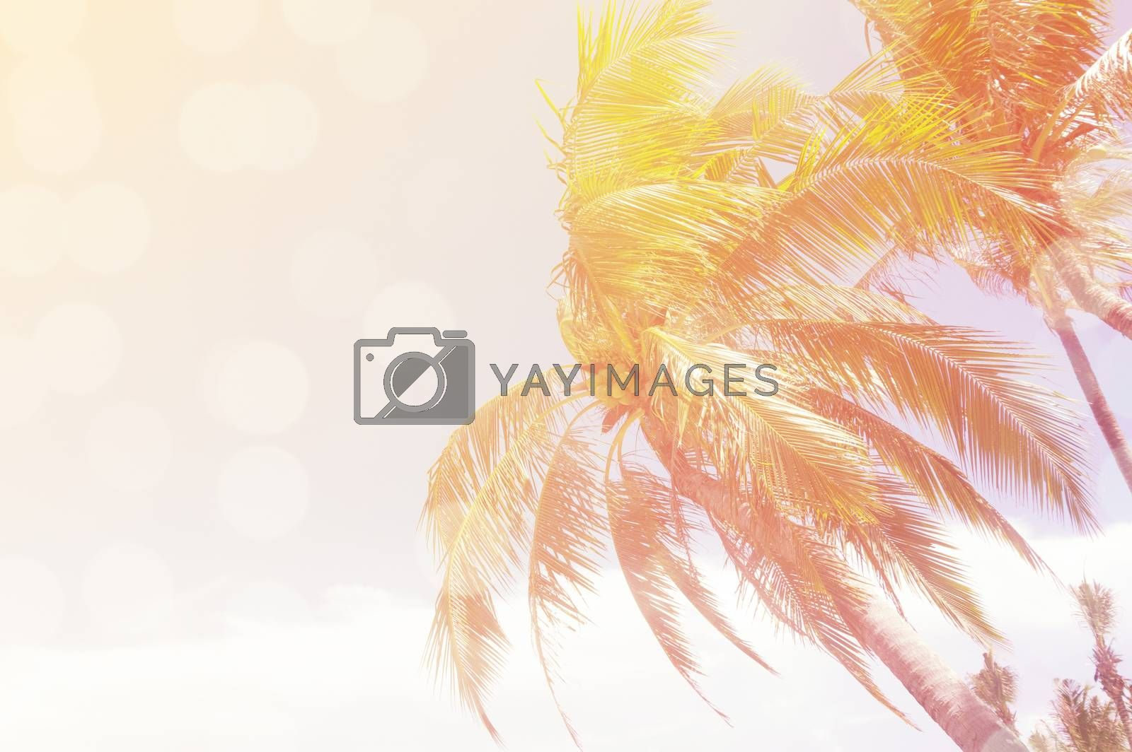 coconut frees over clear sky on day with sun light retro effect image for summer fun party travel concept.