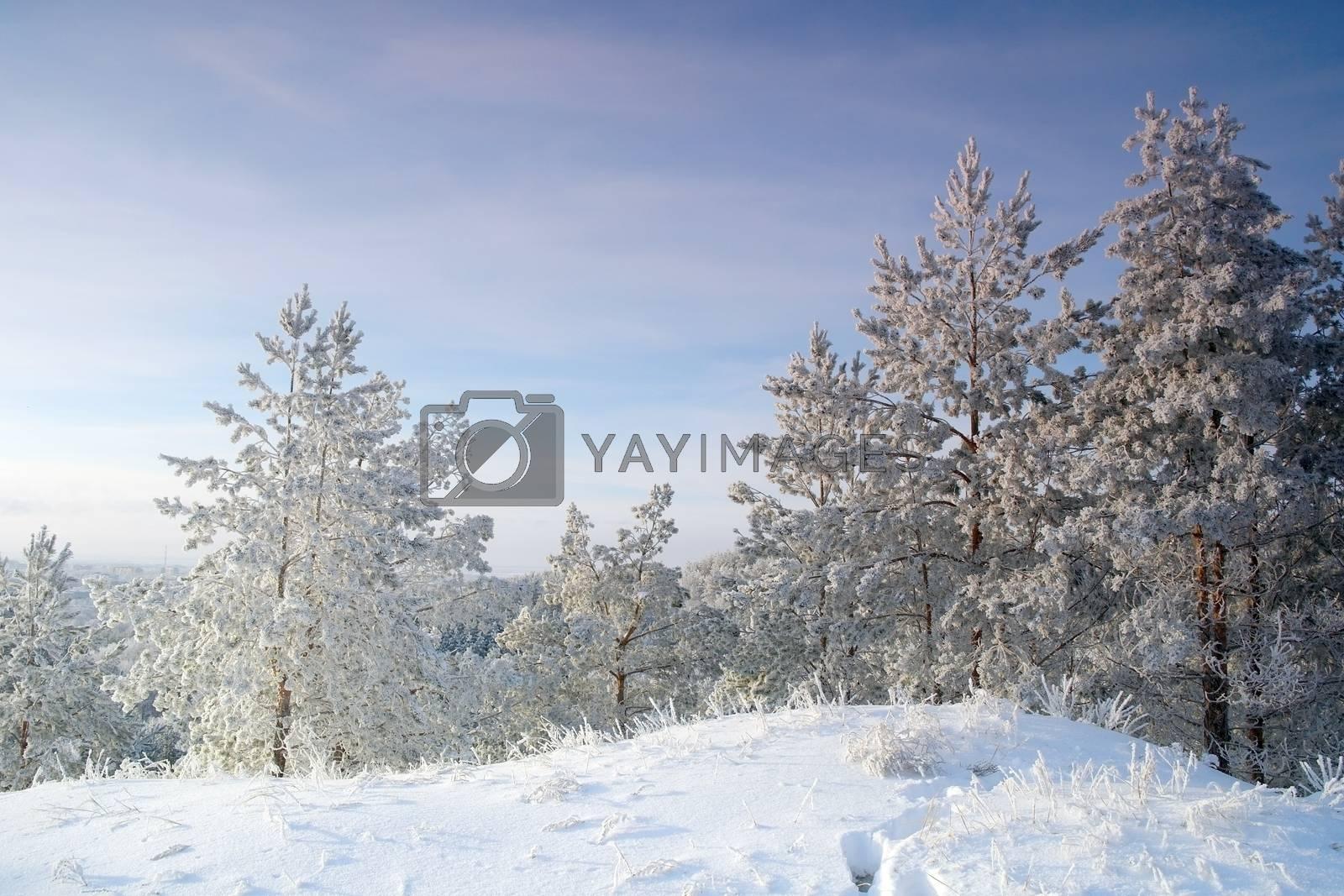 Beautiful winter landscape by sergpet