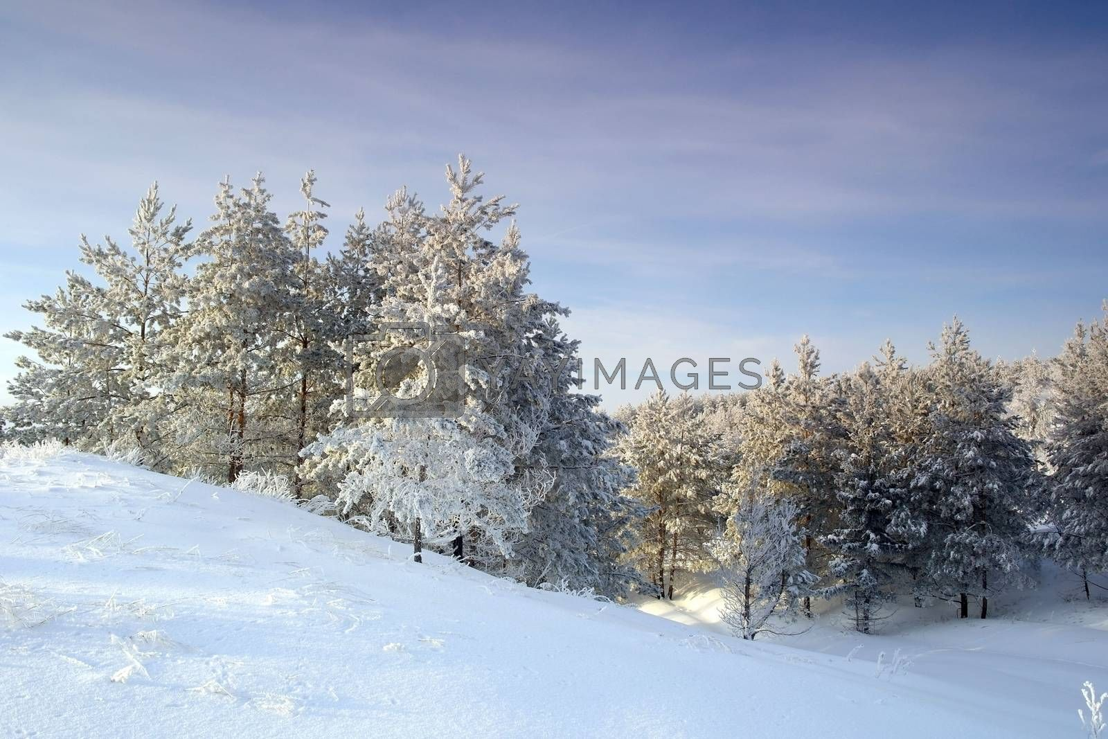 Beautiful winter landscape by sergpet