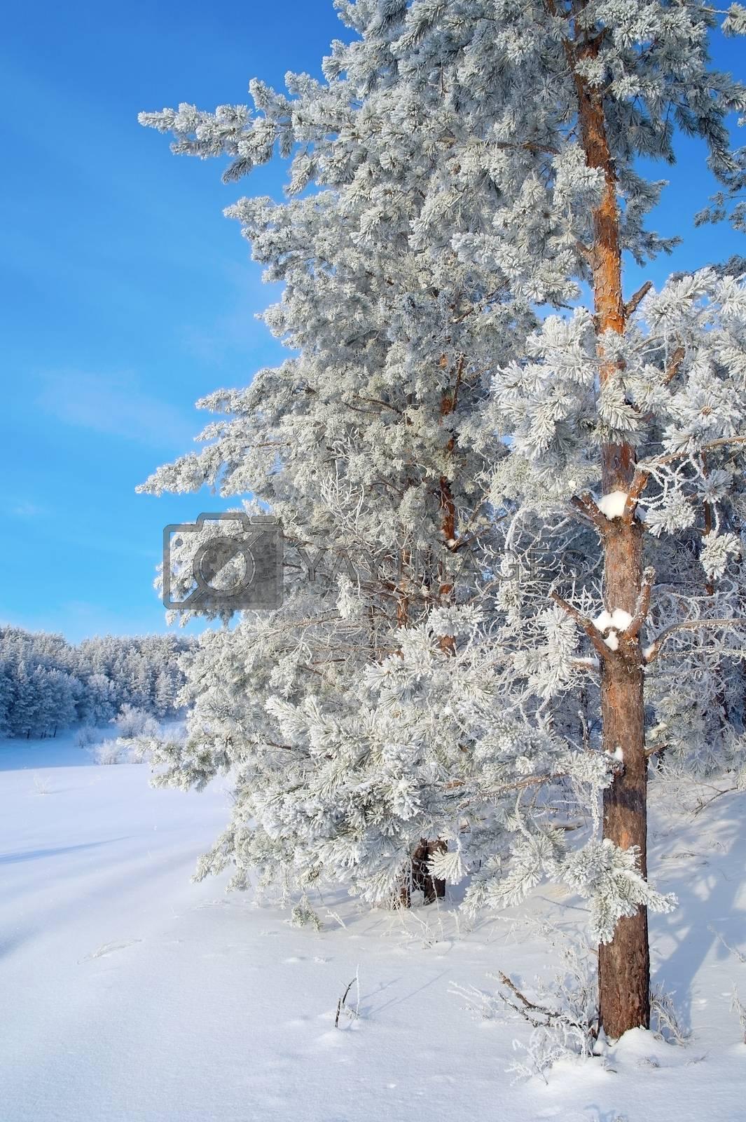 Winter landscape by sergpet