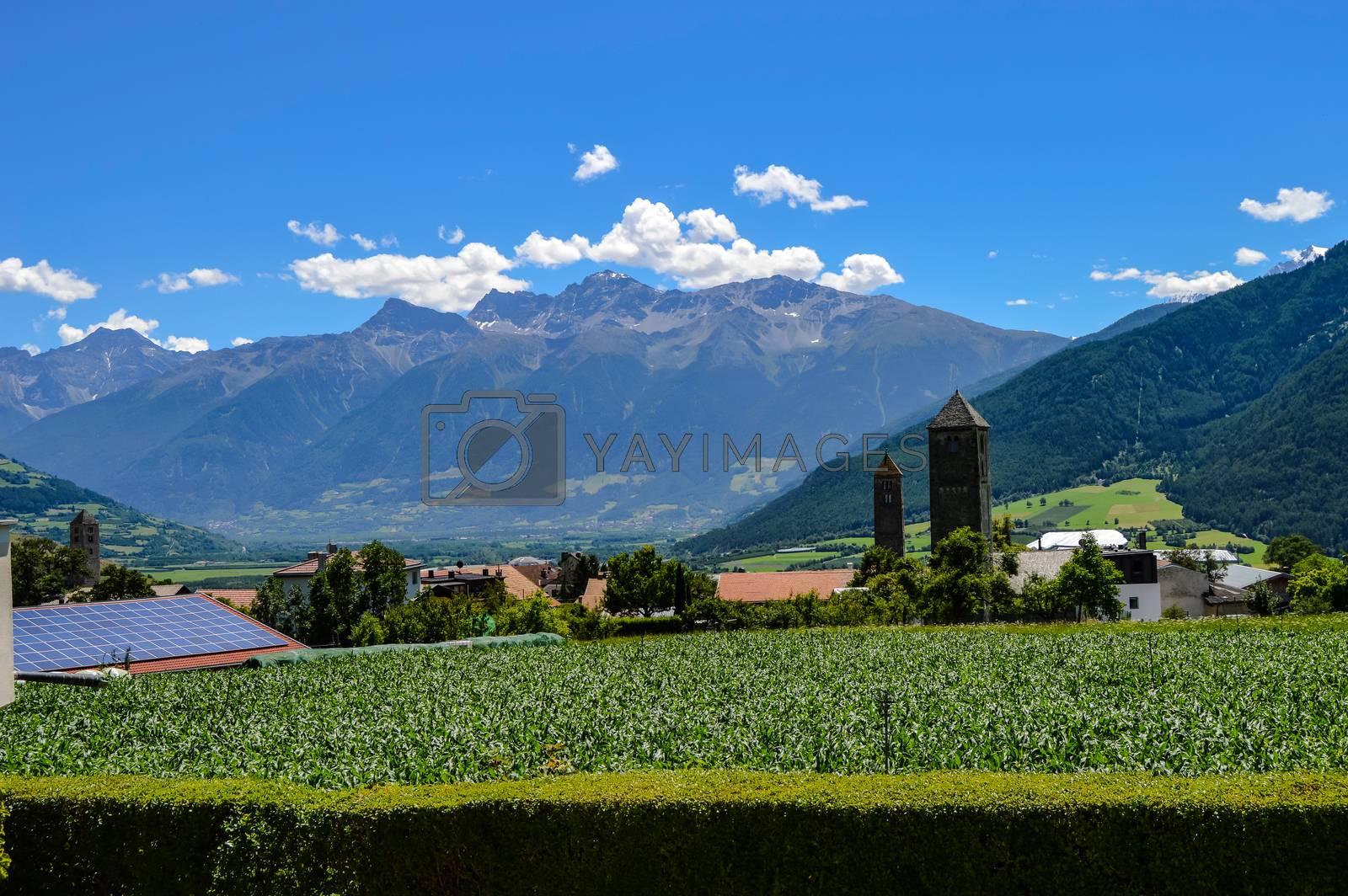 Green meadows and flowers in Valsugana - Trentino-Alto Adige Italy.
