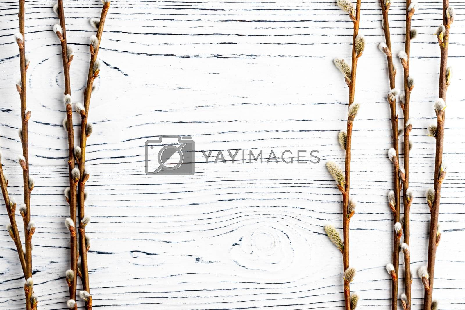 Willow twigs on a white wooden table. Abstracn easter backgroun for design. Blank with copy space for a text.