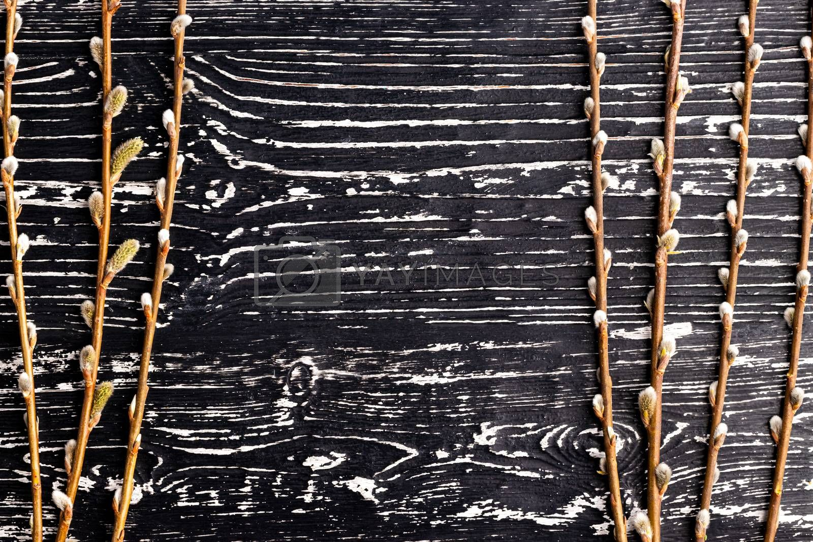 Willow twigs on a black wooden table. Abstracn easter backgroun for design. Blank with copy space for a text.