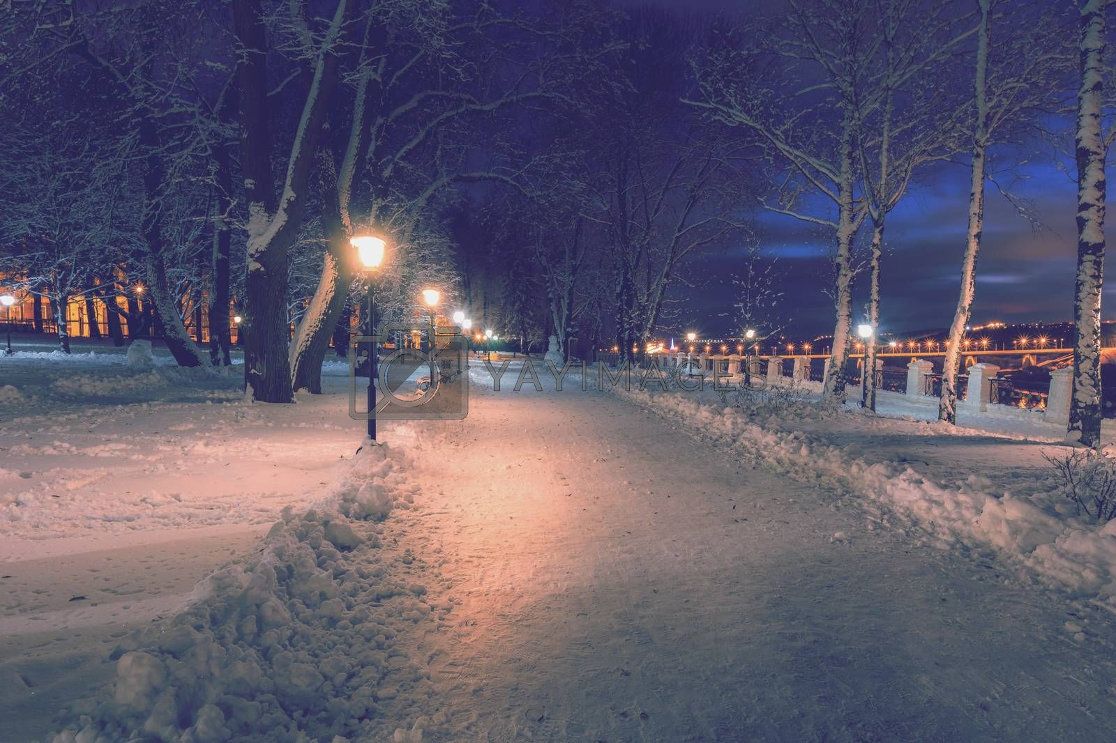 Winter park at night with christmas decorations and lights. by Eugene Yemelyanov