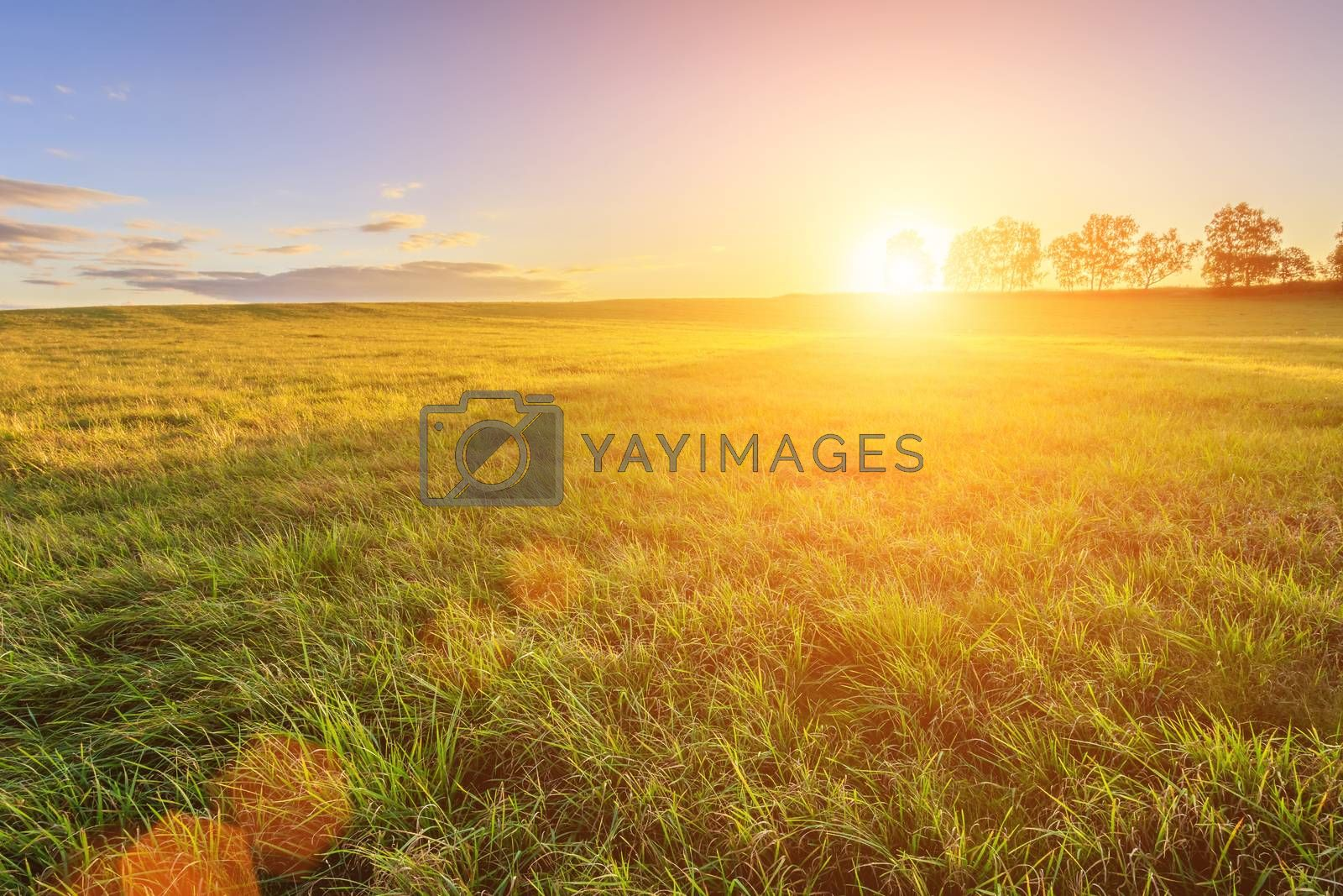 Scene of beautiful sunset at summer field. by Eugene Yemelyanov