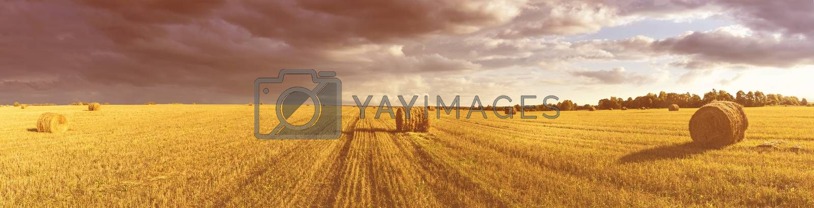Field with a haystacks on sunset or sunrise. by Eugene Yemelyanov