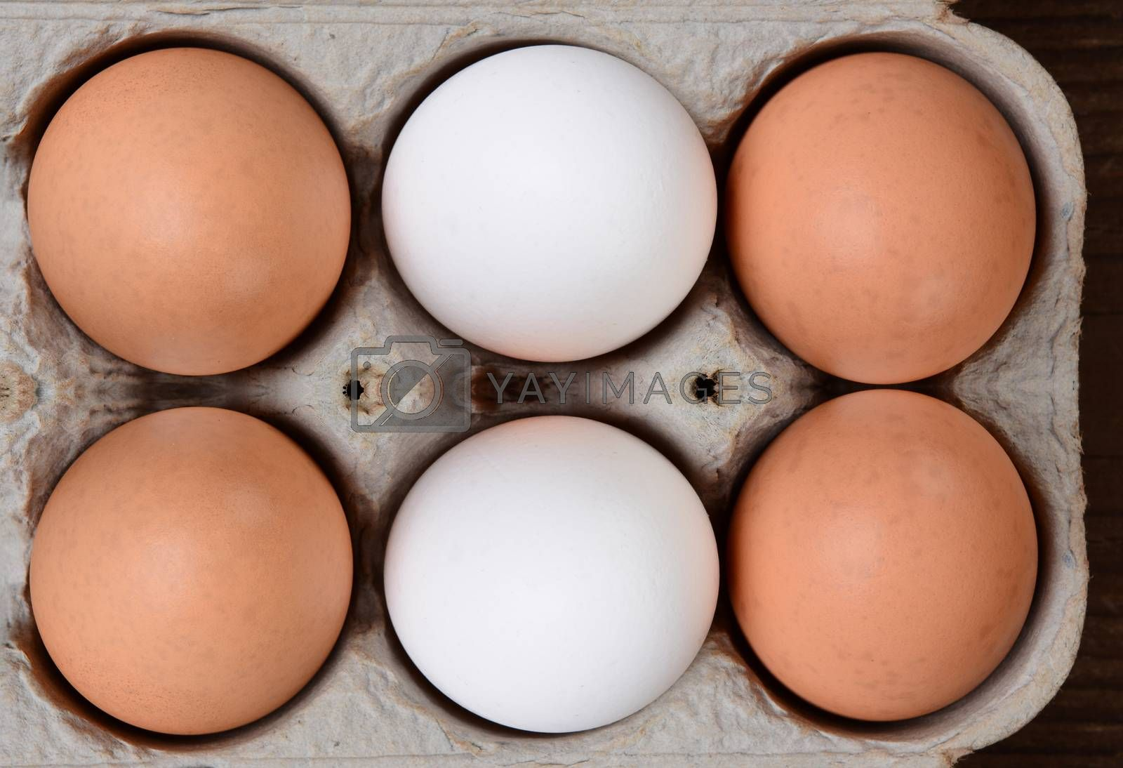 Brown and White Eggs in 6 Pack Carton by sCukrov