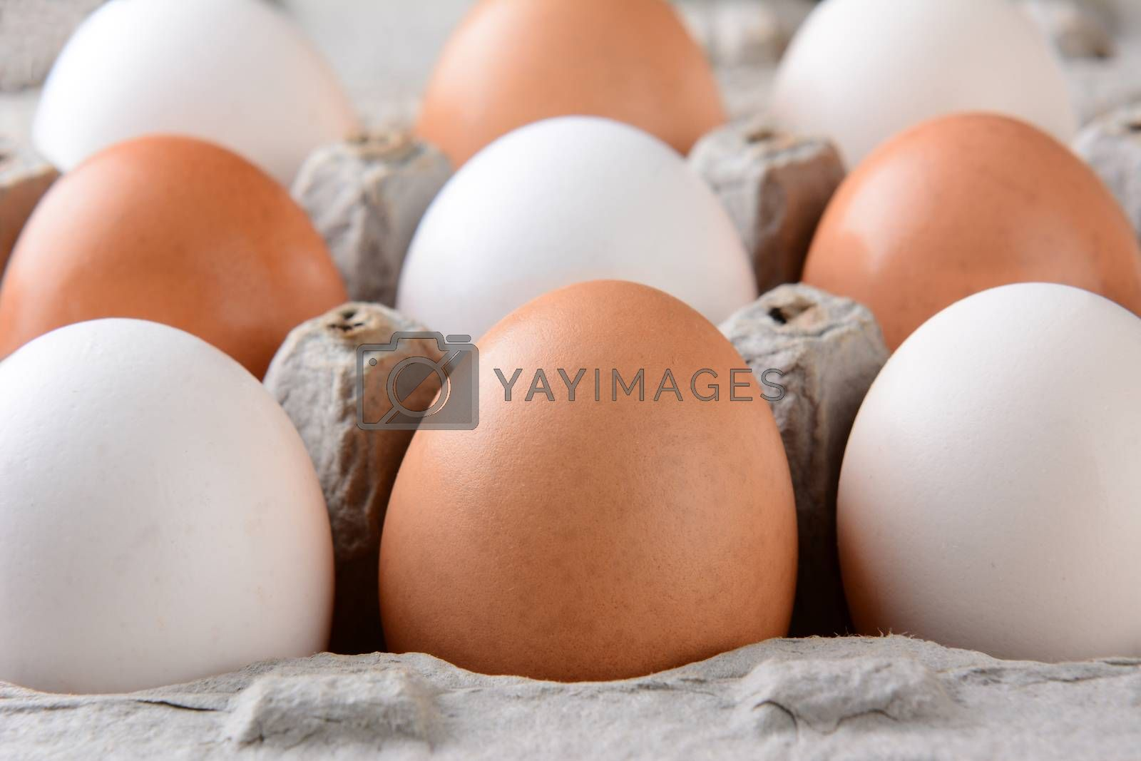 Closeup of Eggs in Cardboard Carton by sCukrov