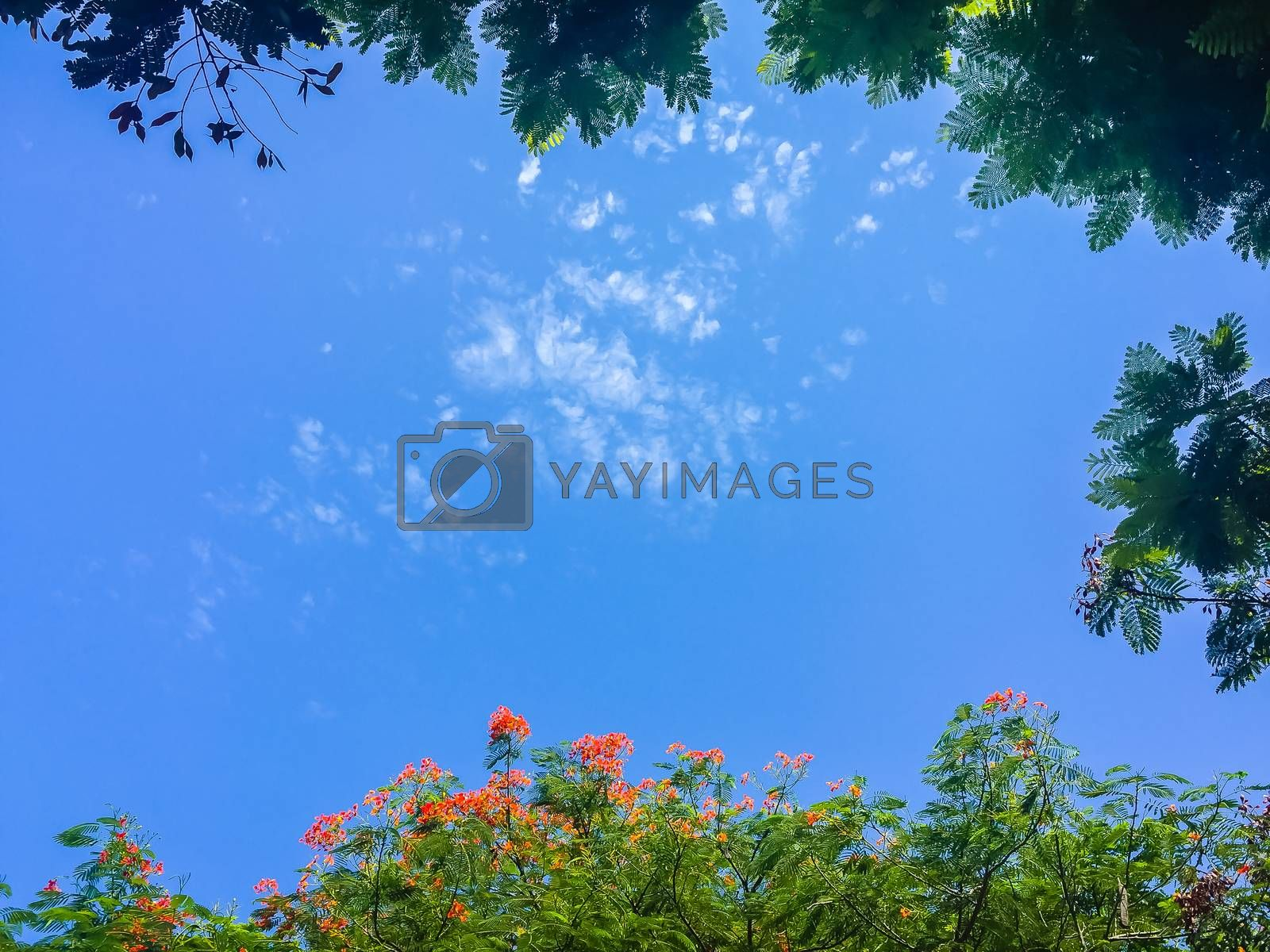 Green leaves and red flowers frame with blue sky background and copy space. Nature frame of green leave branches on blue sky background.