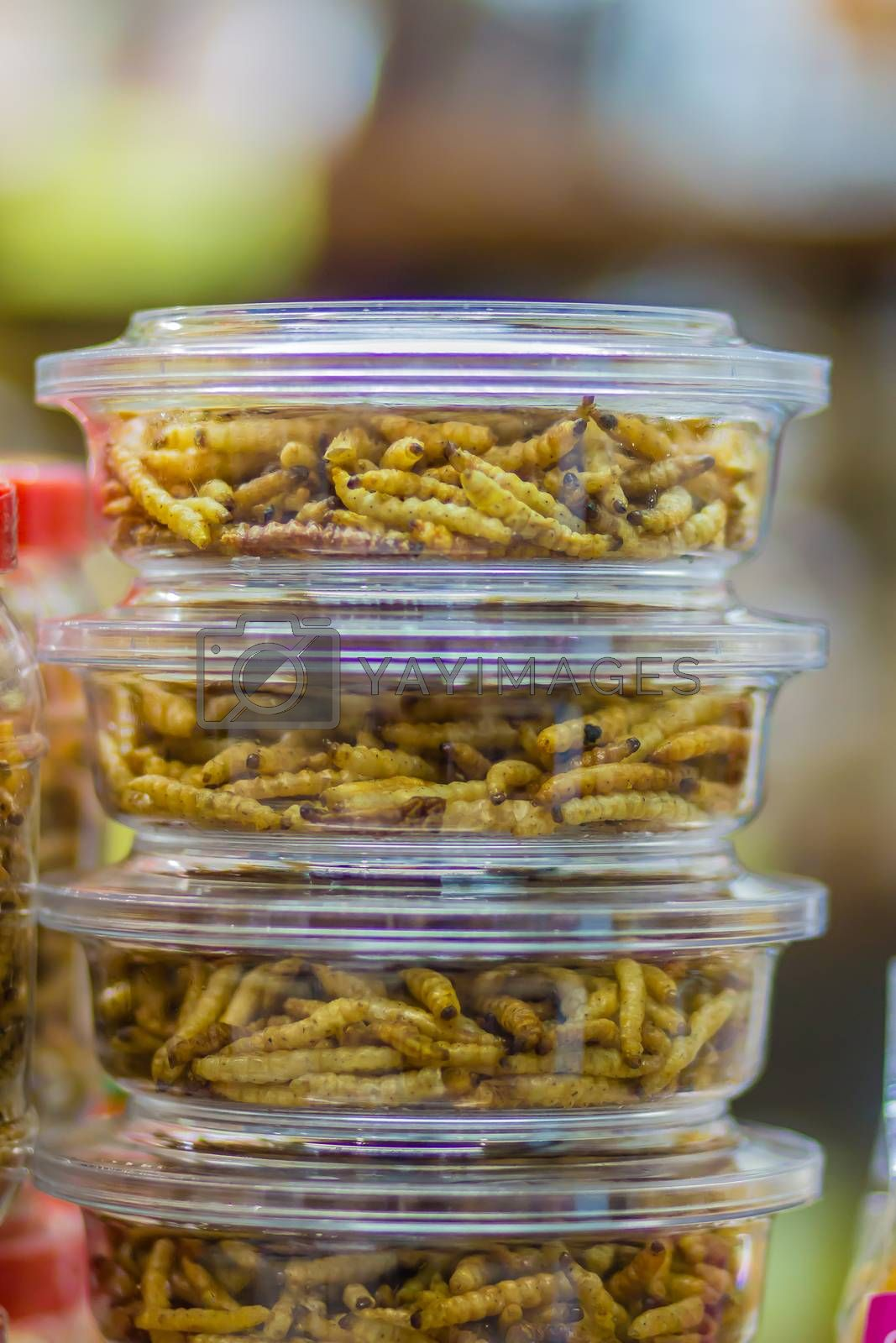 Fried bamboo worms packing in the market for sale. Bamboo caterpillar (Omphisa Fuscidentalis), fried bamboo worms that ready to eat and for souvenir.
