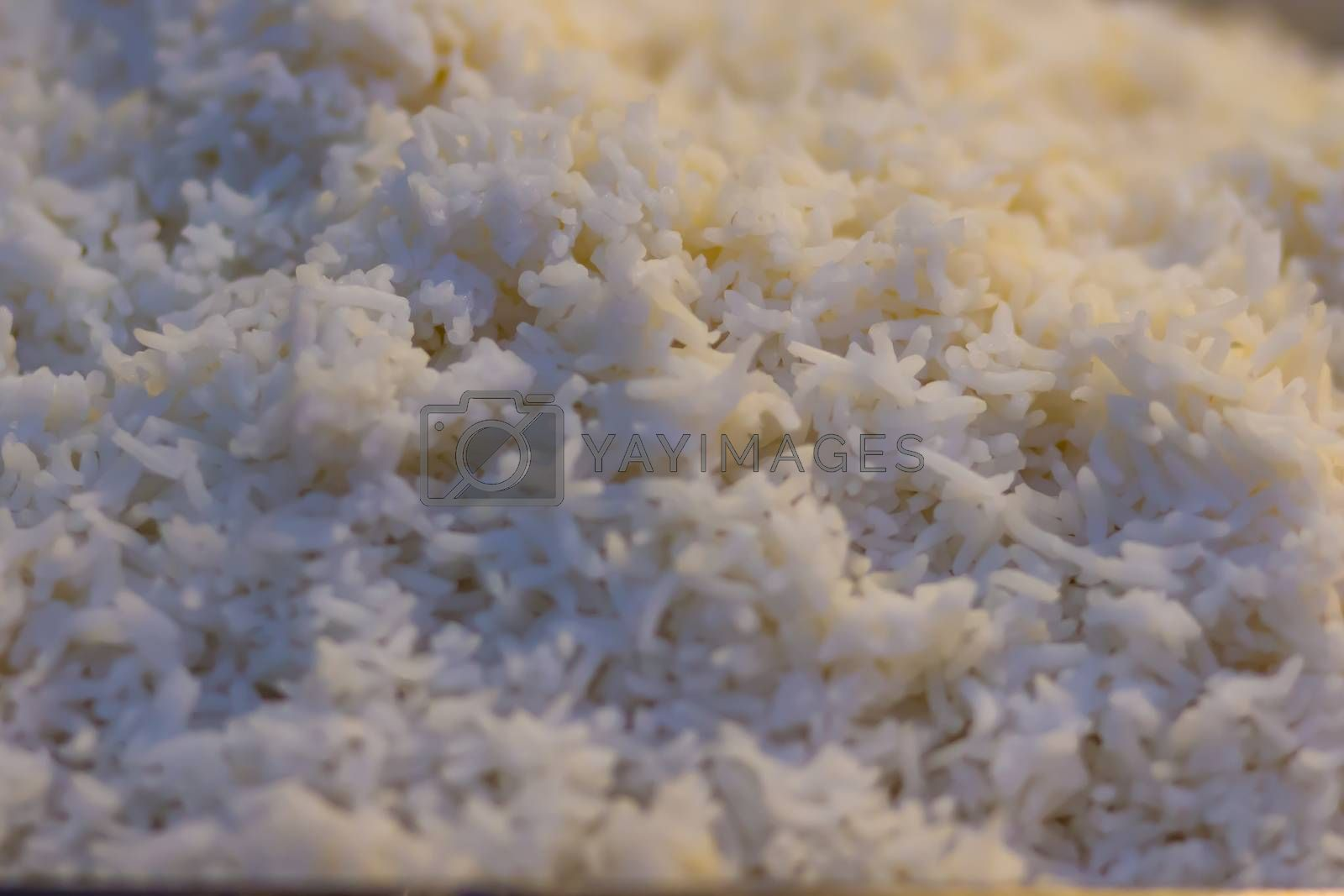 Cooked thai jasmine rice background. Jasmine rice or Khao hom mali also known as aromatic rice that grown primarily in Thailand (Thai hom mali or Thai fragrant rice)