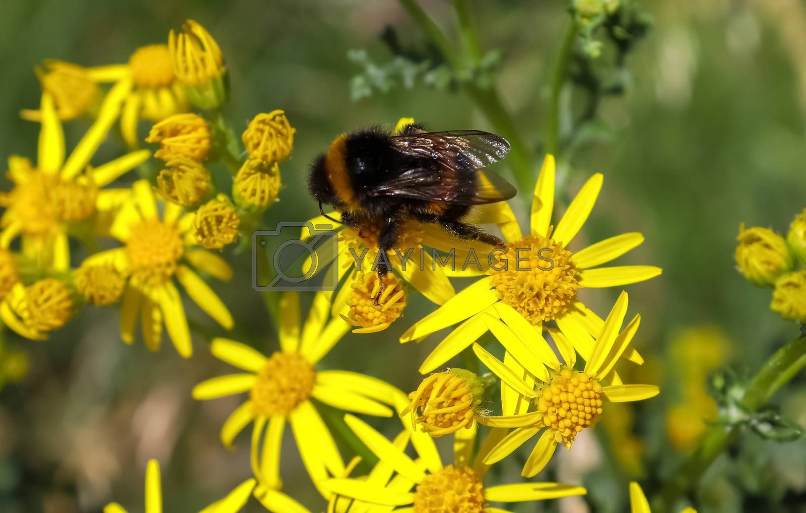Beautiful flowers on a meadow in summer with insects like bees a by MP_foto71