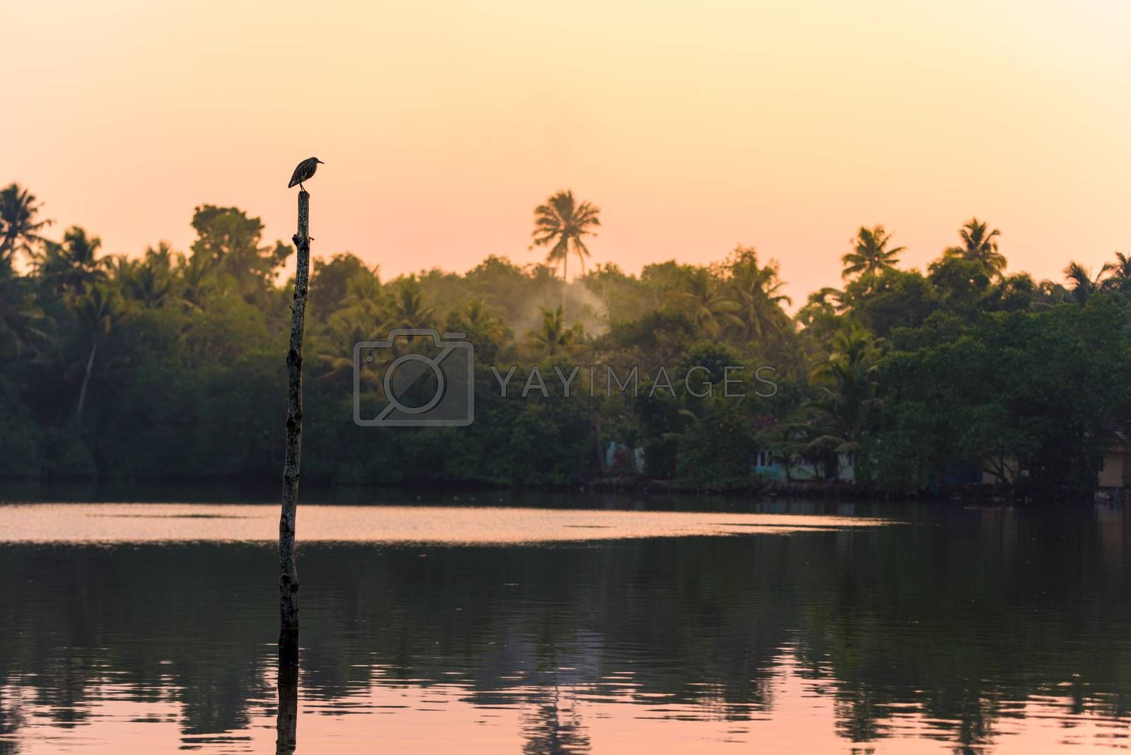 A fishing bird stands on a stilt in a lake, in a tropical jungle popular for yoga retreat and birdwatching, in Backwaters, Eramalloor, Kerala, India