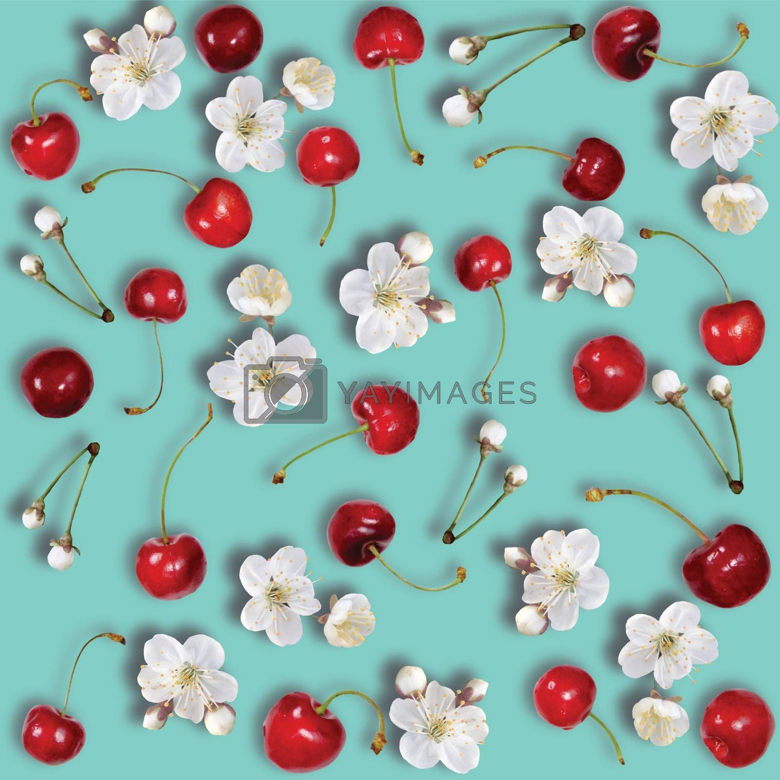 Fresh cherries with stems and blossom background. Creative beautiful red ripe cherries and cherry blossom summer berries pattern. Top view