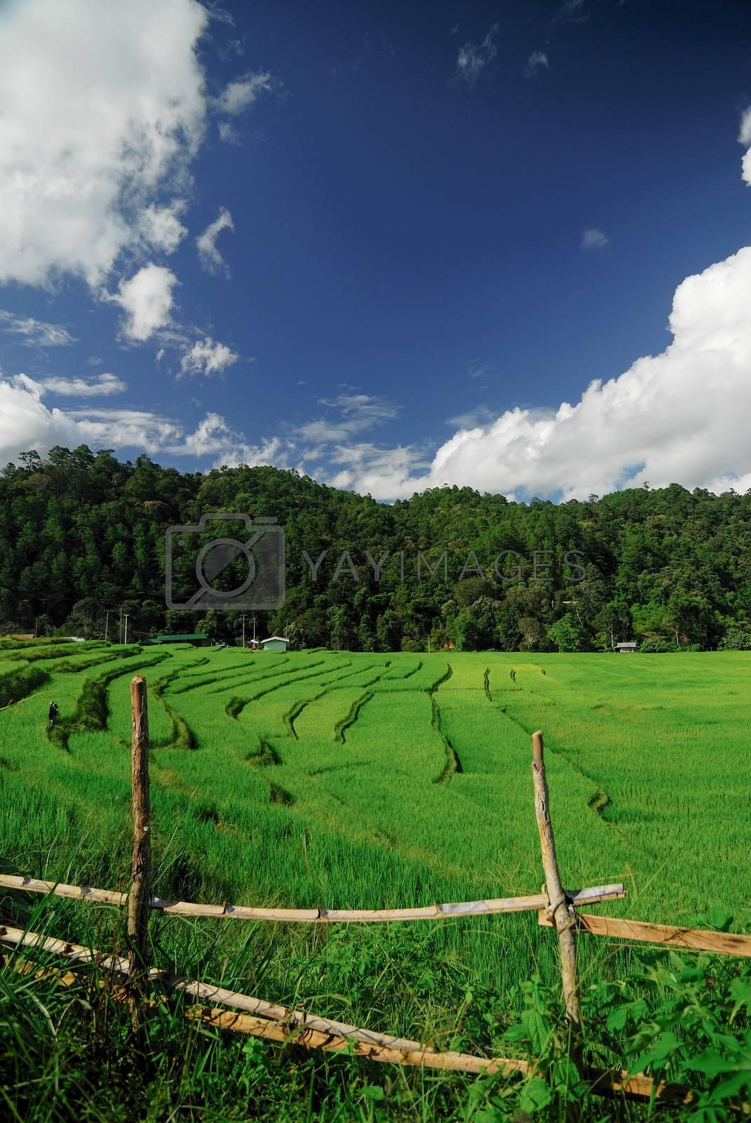Terrace rice fields in Mae Chaem District Chiang Mai, Thailand