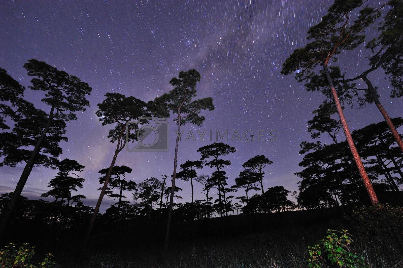 Beautiful night sky full of stars at pine tree forest Phu Soi Dao national park Uttaradit province Thailand