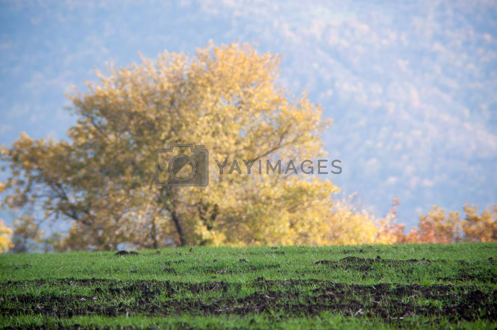 Majestic autumn trees glowing by sunlight. Red and yellow autumn leaves. Dramatic scene. Azerbaijan. Selective focus