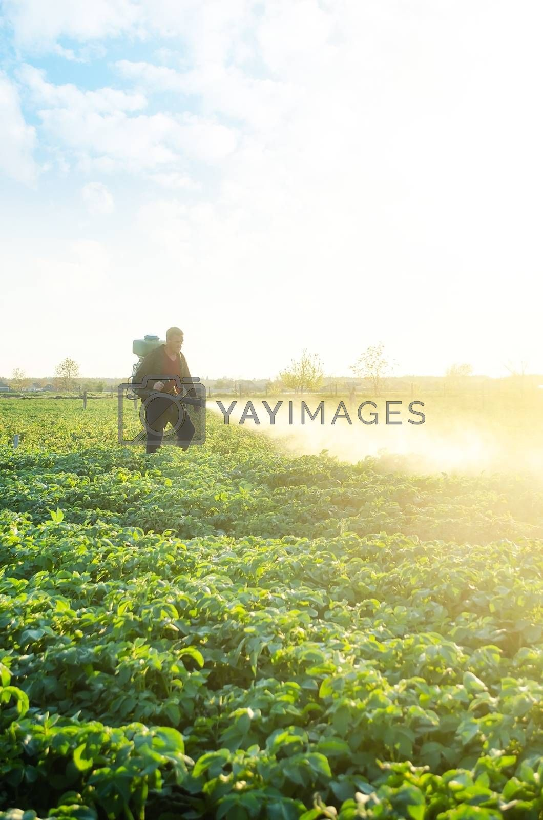 A farmer sprays a potato plantation with pesticides. Protecting against insect plants and fungal infections. The use of chemicals in agriculture. Agriculture and agribusiness, agricultural industry. by iLixe48
