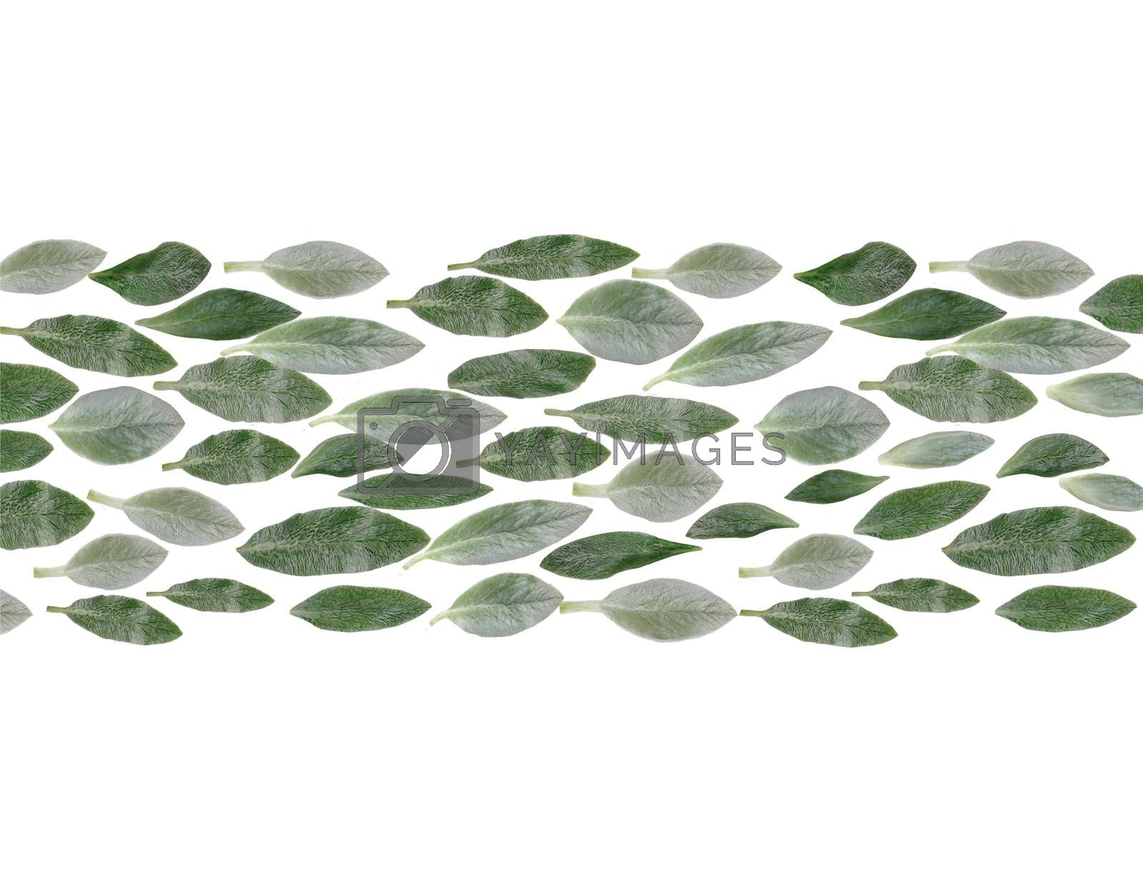 Green leaves horizontal line natural pattern isolated on white background. Closeup top view.