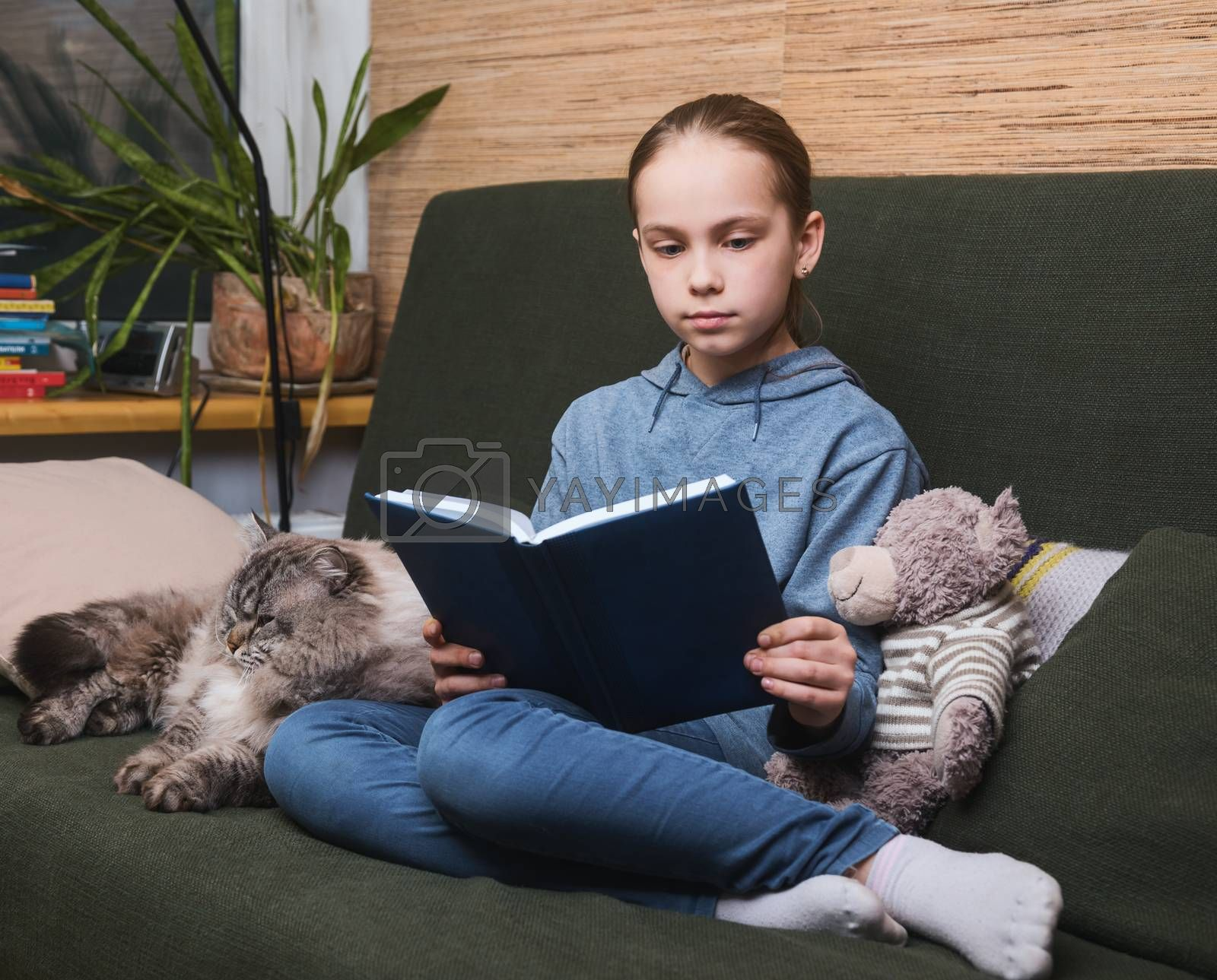Schoolgirl reading a book sitting on a sofa with cat and toy bear. Girl is studying at home doing her homework during self-isolation. Homeschooling concept