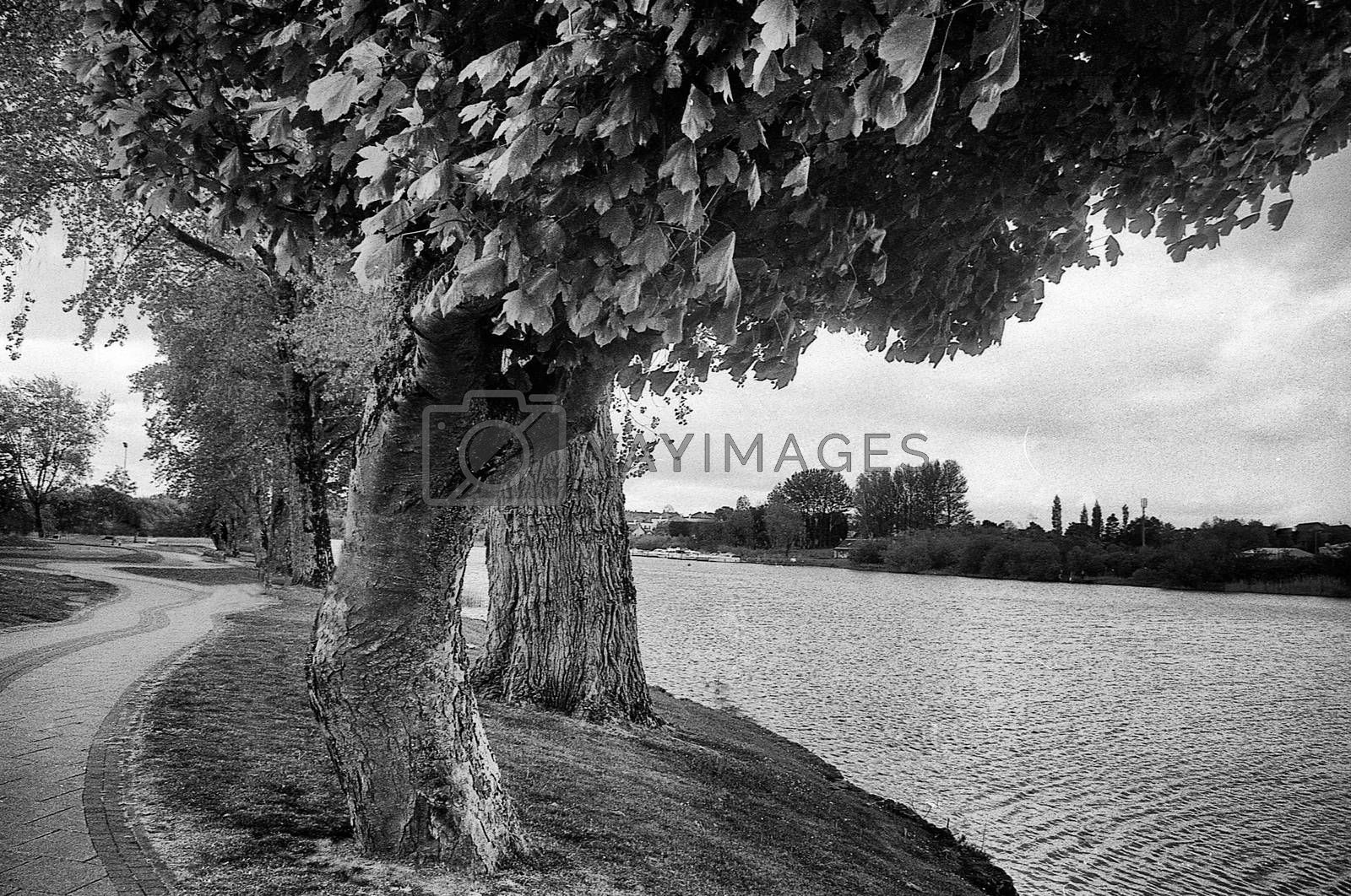 some trees and a large quiet river, this black and white photo was taken with a pinhole film camera, which corresponds to the camera characteristic