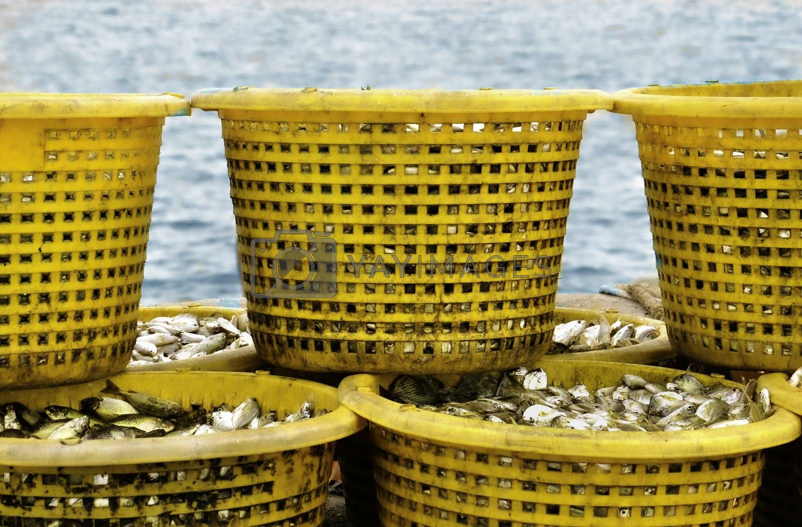 A stack of freshly caught fish in yellow plastic baskets, on a jetty waiting to go to the local market.