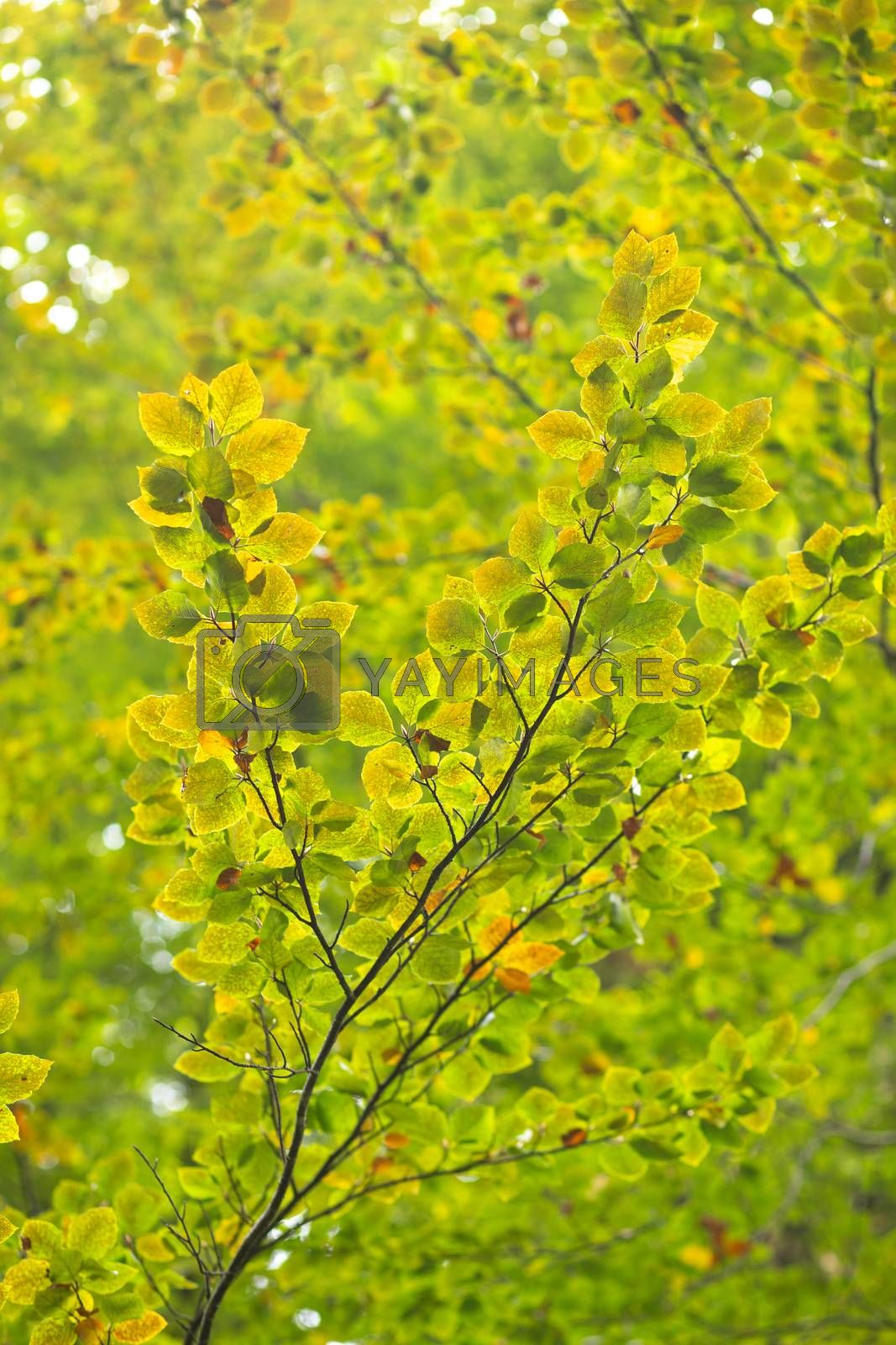 leaves on a branch. Autumn