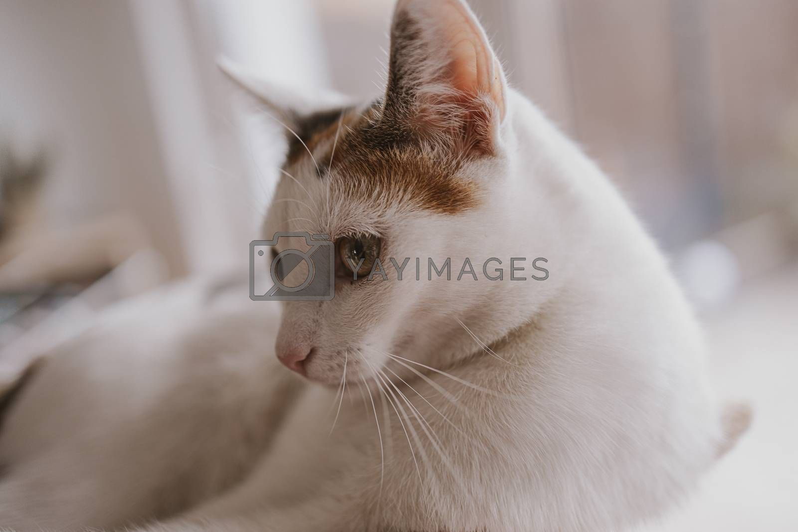 beautiful cute little white-red cat closeup feline