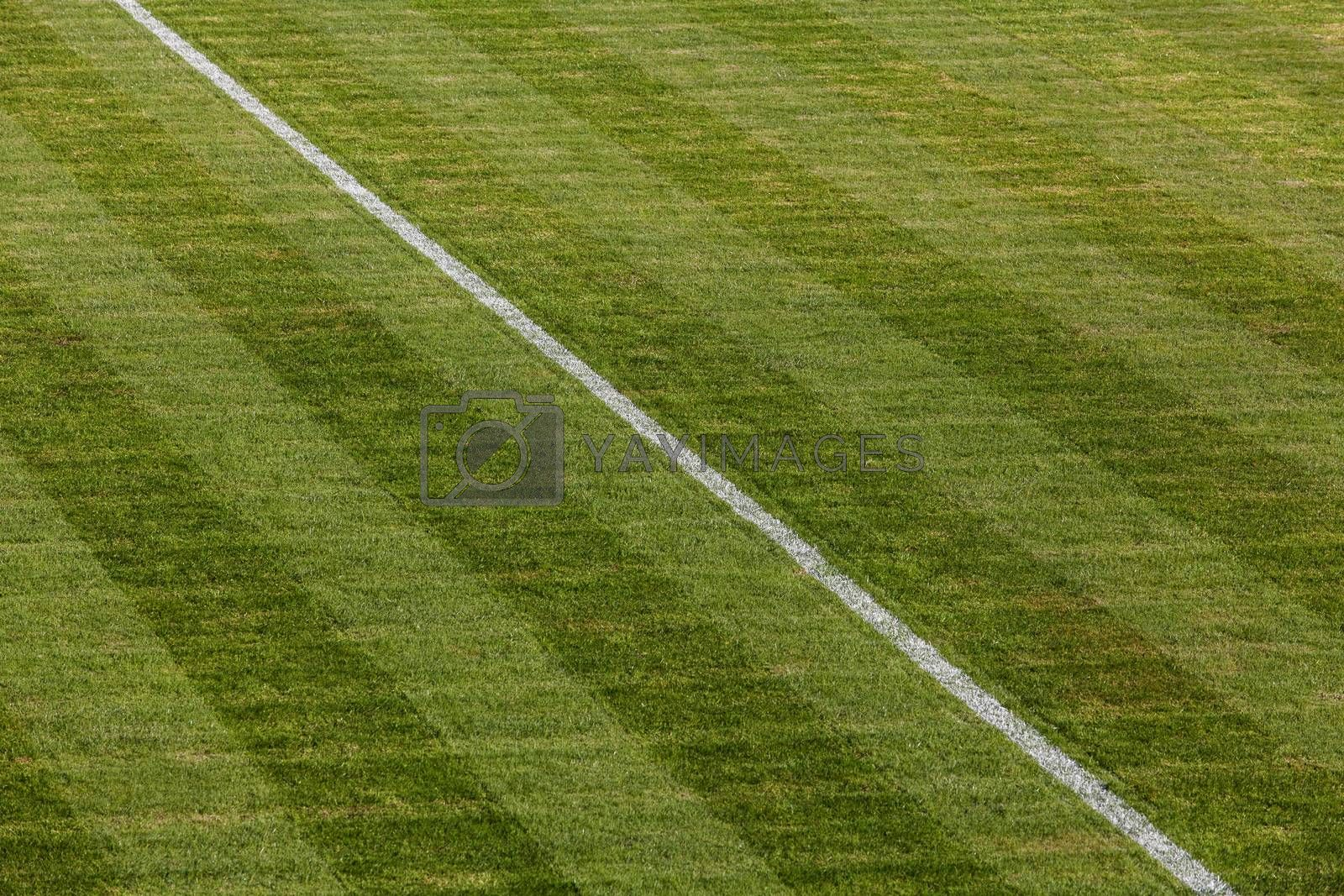 Royalty free image of Natural green grass soccer field by IxMaster