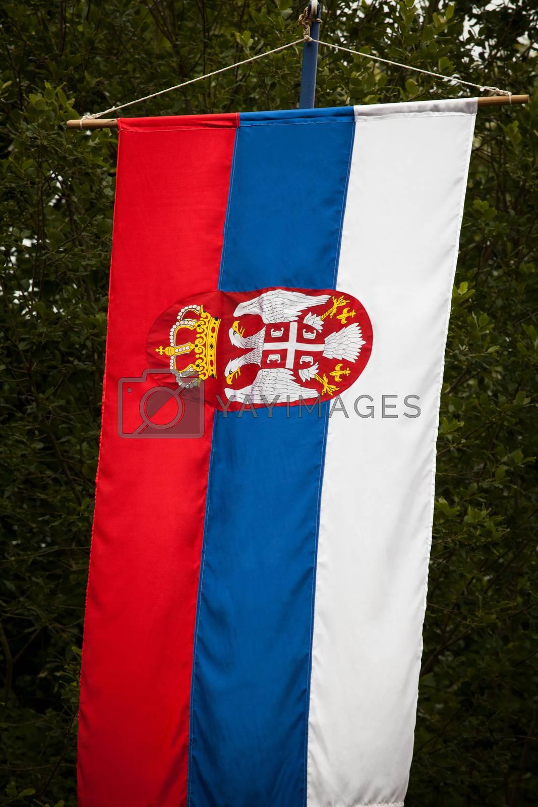 Royalty free image of Serbian national flag by IxMaster