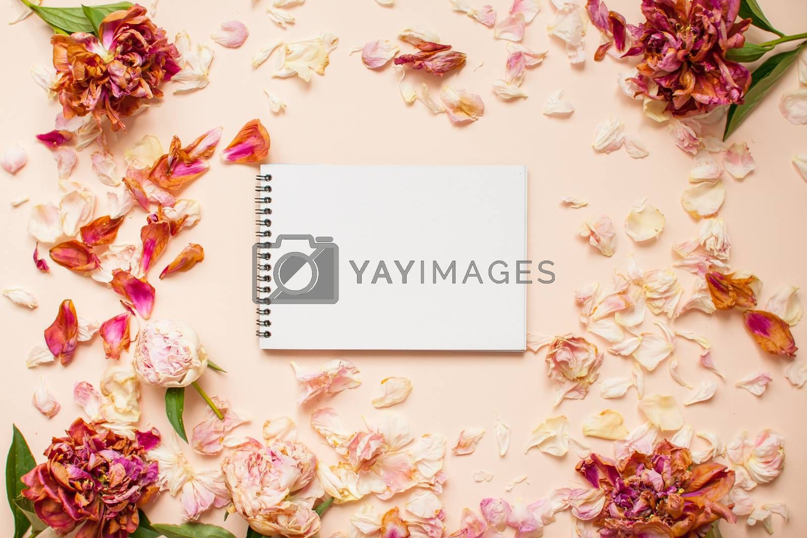 Top view: frame of dried pink peonies and petals with white paper in the center