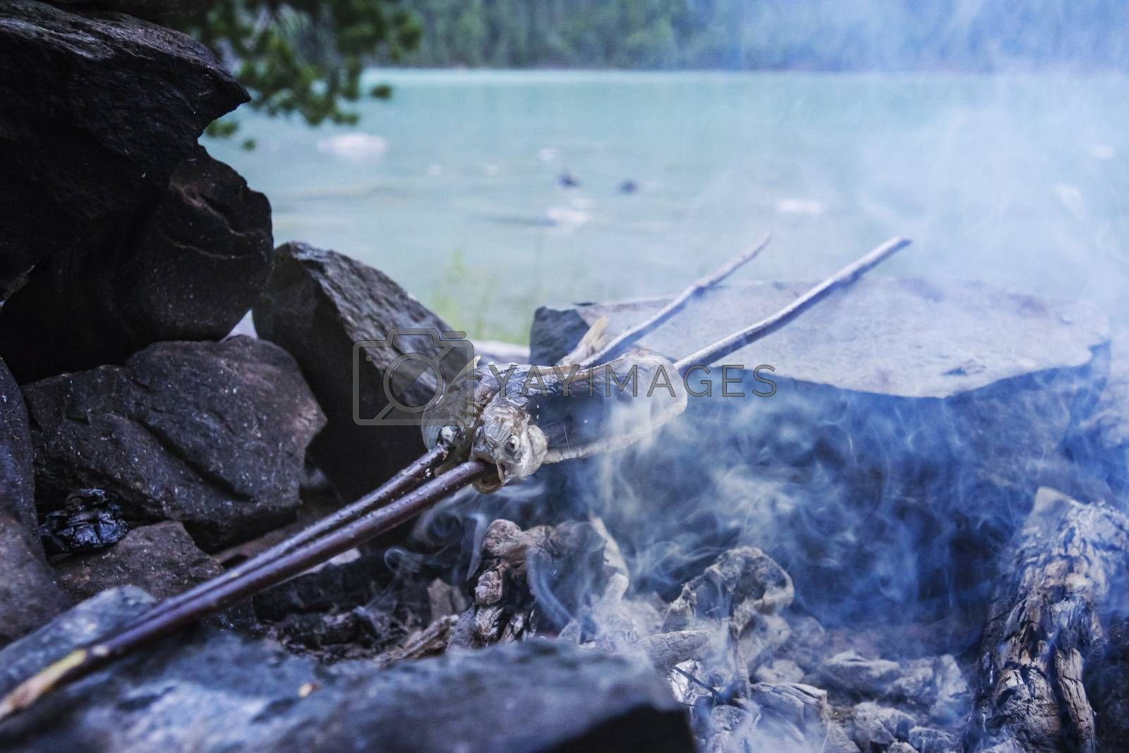 Royalty free image of Fish to grilled on the beachon the background of a beautiful lake. Tourist food during a halt in the campaign. fish grayling roasted on a spit in the fire by diy13