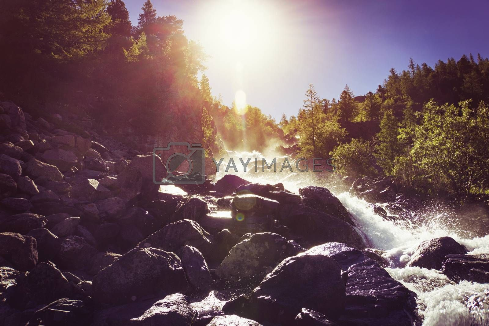 Royalty free image of beautiful waterfall cascads on river in forest in mountains. water motion. beautiful scenery landscape of river in woods under summer sun light. by diy13