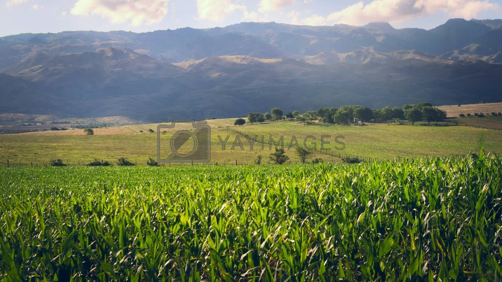 Corn plantations and fertile farmlands in the meadows of San Luis, Argentina.