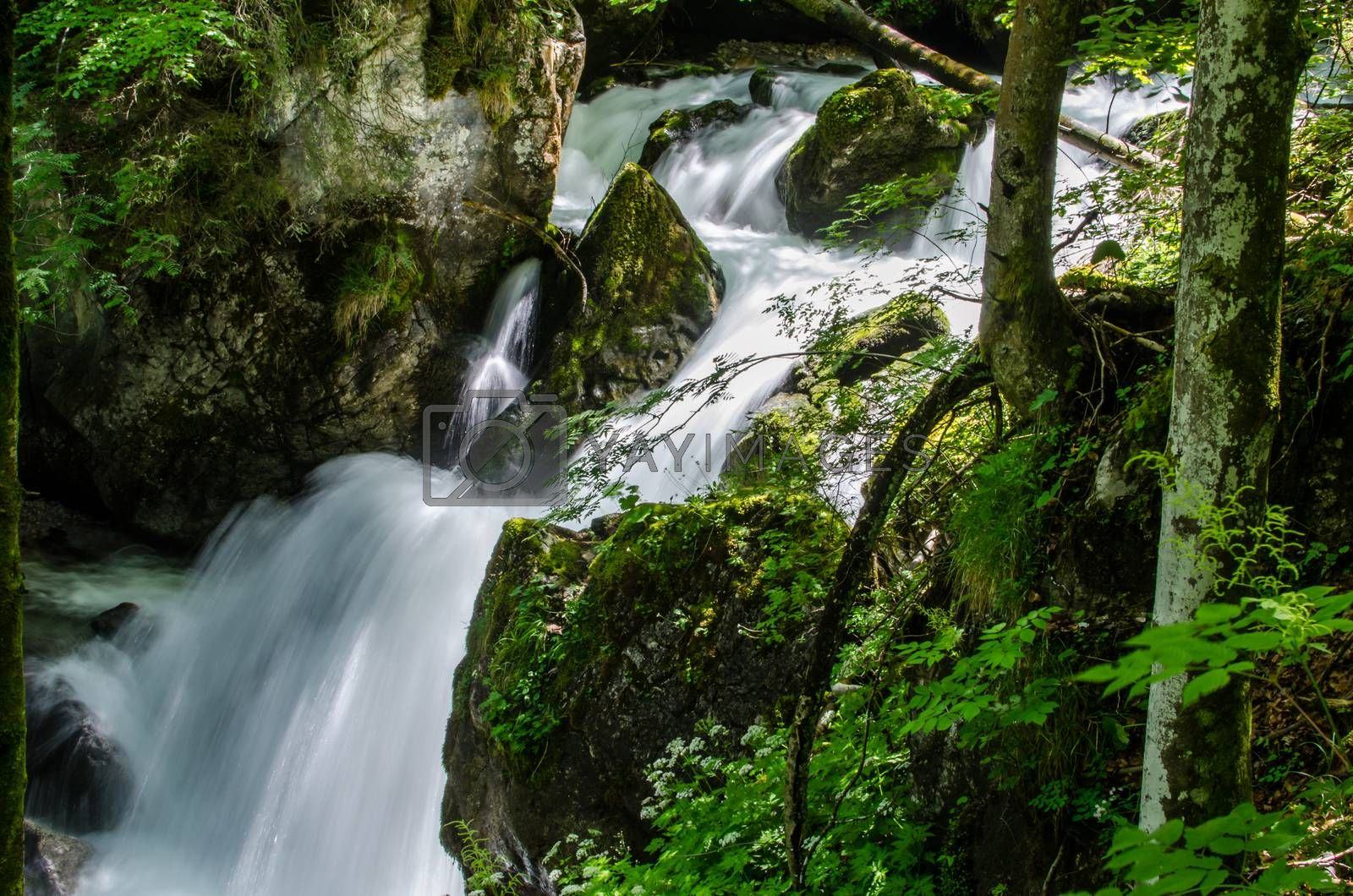Royalty free image of fast waterfall in the forest by thomaseder
