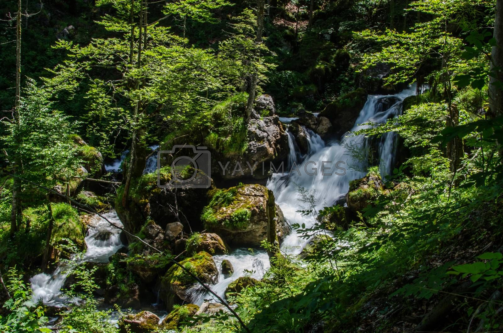 Royalty free image of Waterfalls in the forest by thomaseder