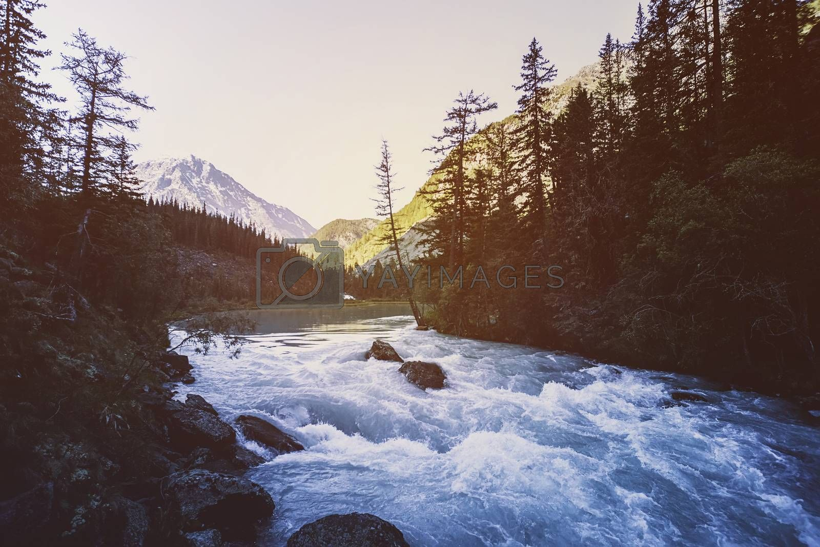 Royalty free image of Beautiful Mountain River. Autumn. Current water. Tree on the stone. Stream water. waterfall landscape in Canada. The red maples leaves frame this beautiful waterfall by diy13