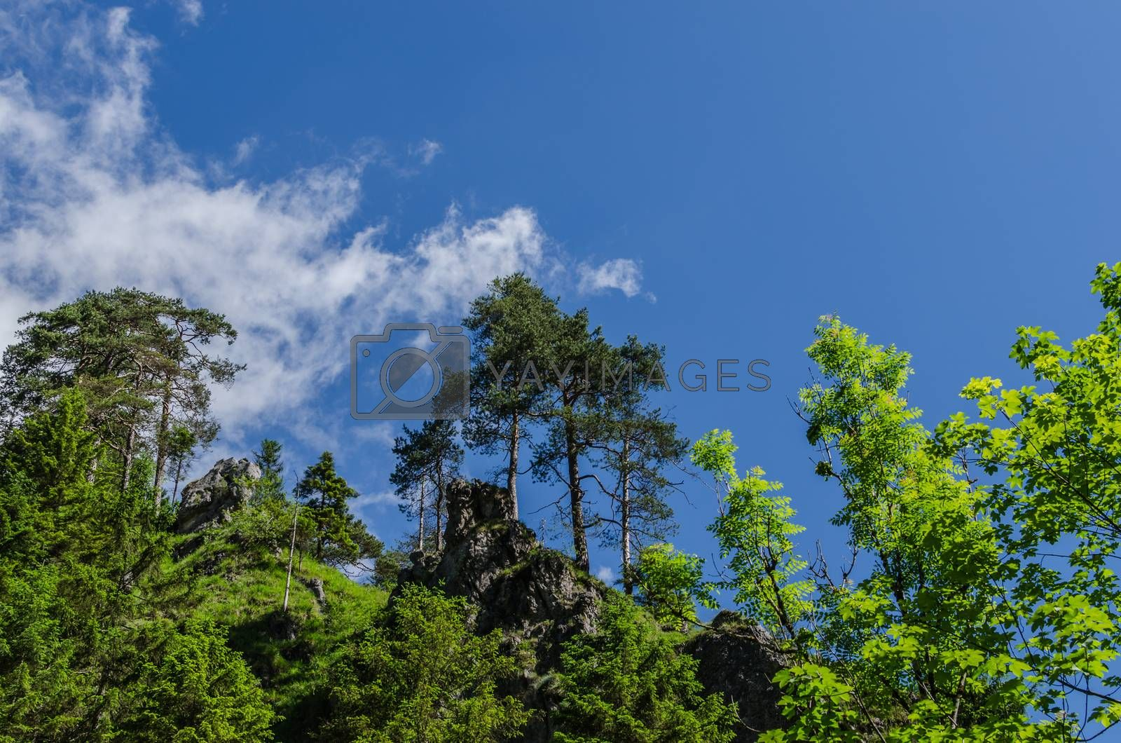 Royalty free image of different green trees by thomaseder